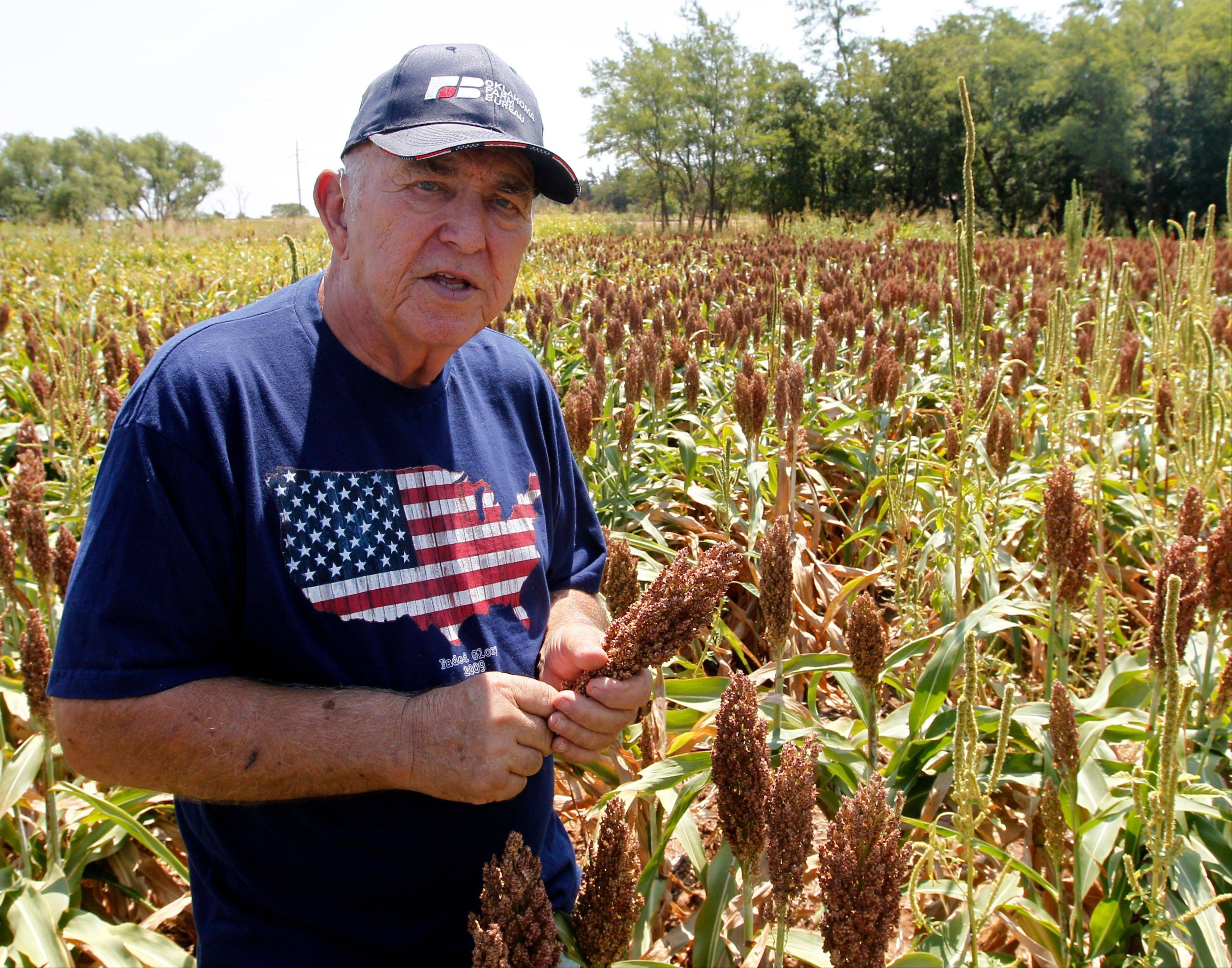 Gary Johnson stands in a field of milo sorghum Wednesday on his farm in Waukomis, Okla,