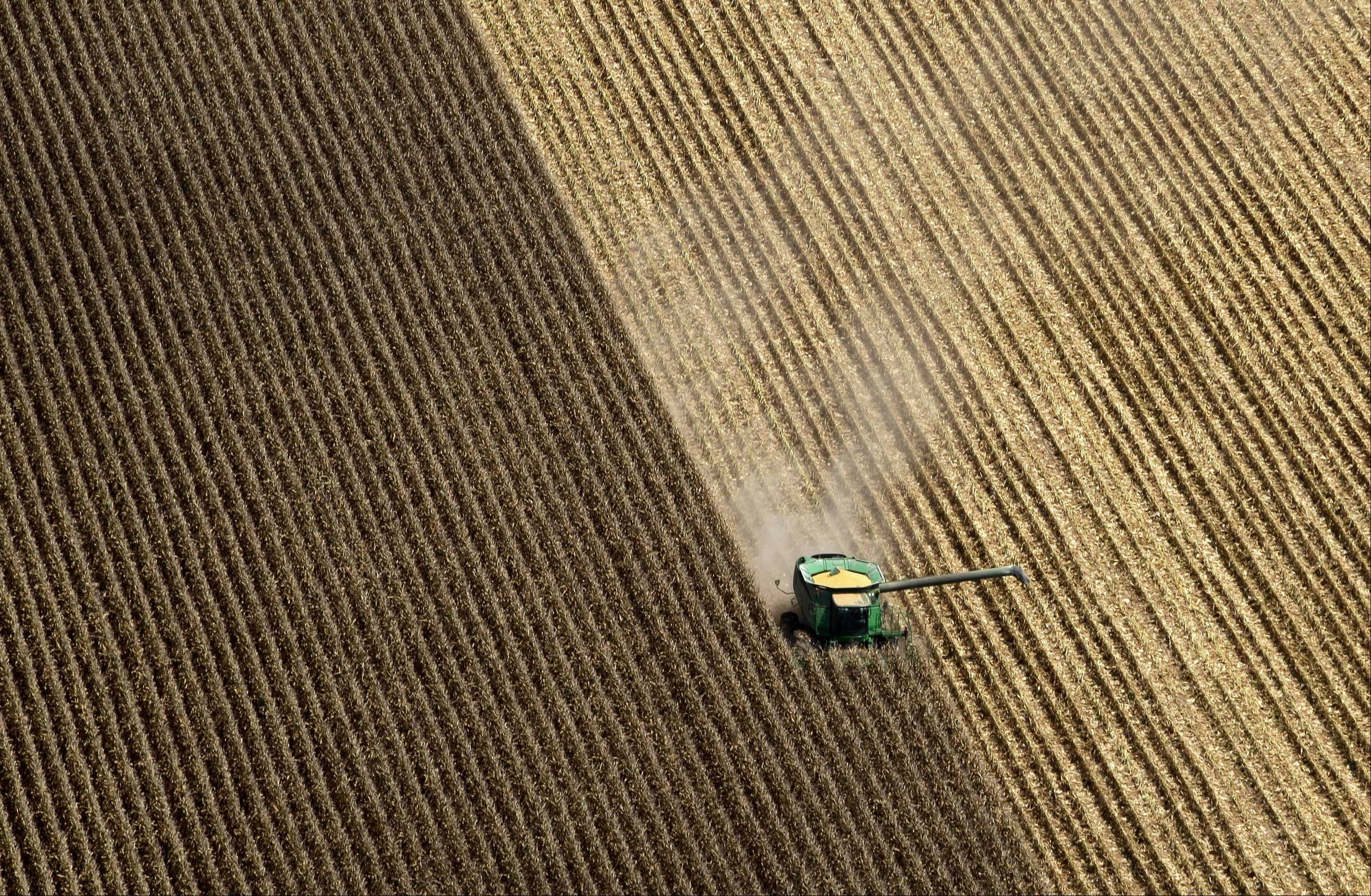 A combine harvests corn Thursday in a field near Coy, Ark.