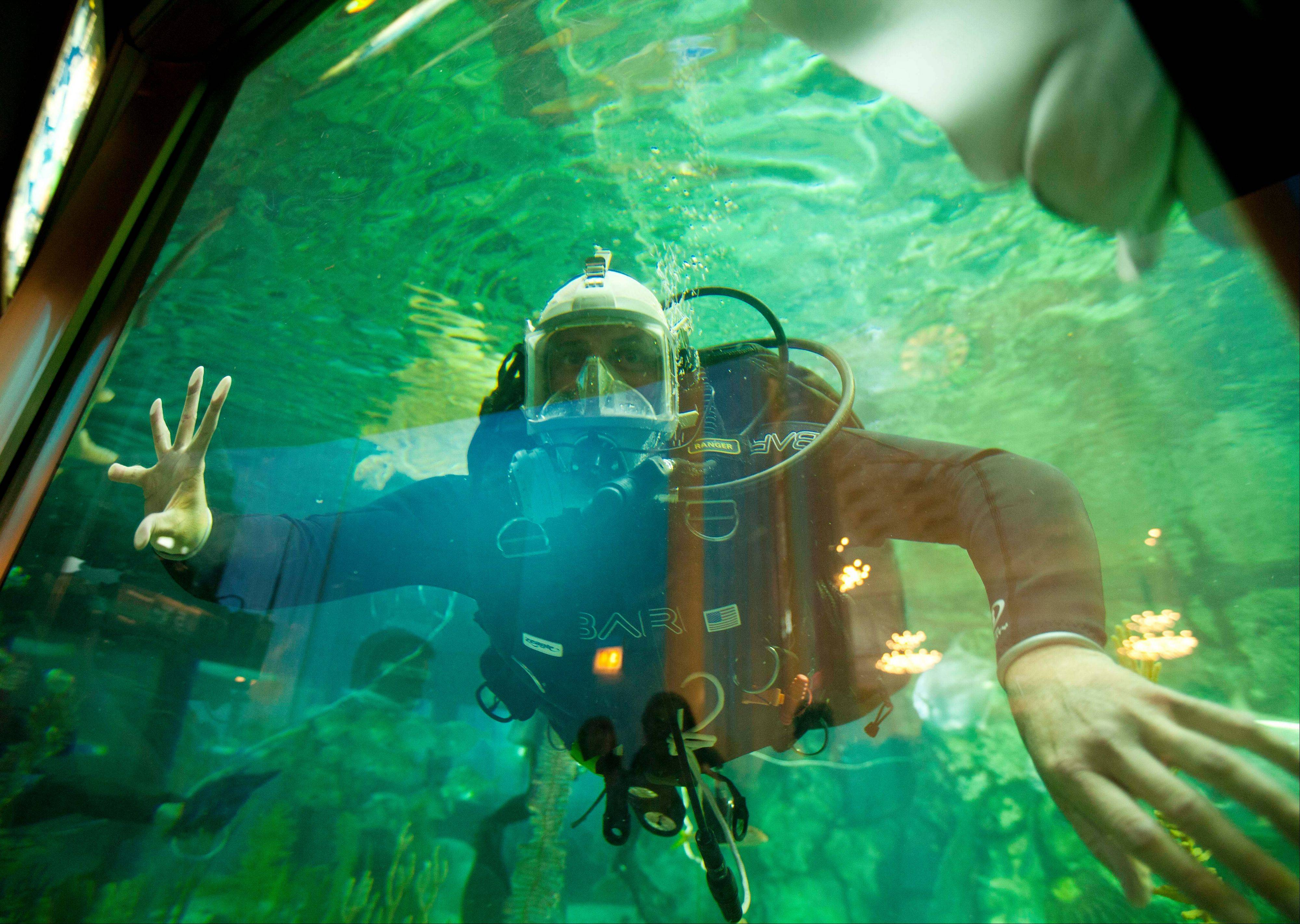 A member of the Navy Experimental Diving Unit swims in the Shedd Aquarium's Caribbean Reef exhibit on Thursday in Chicago.