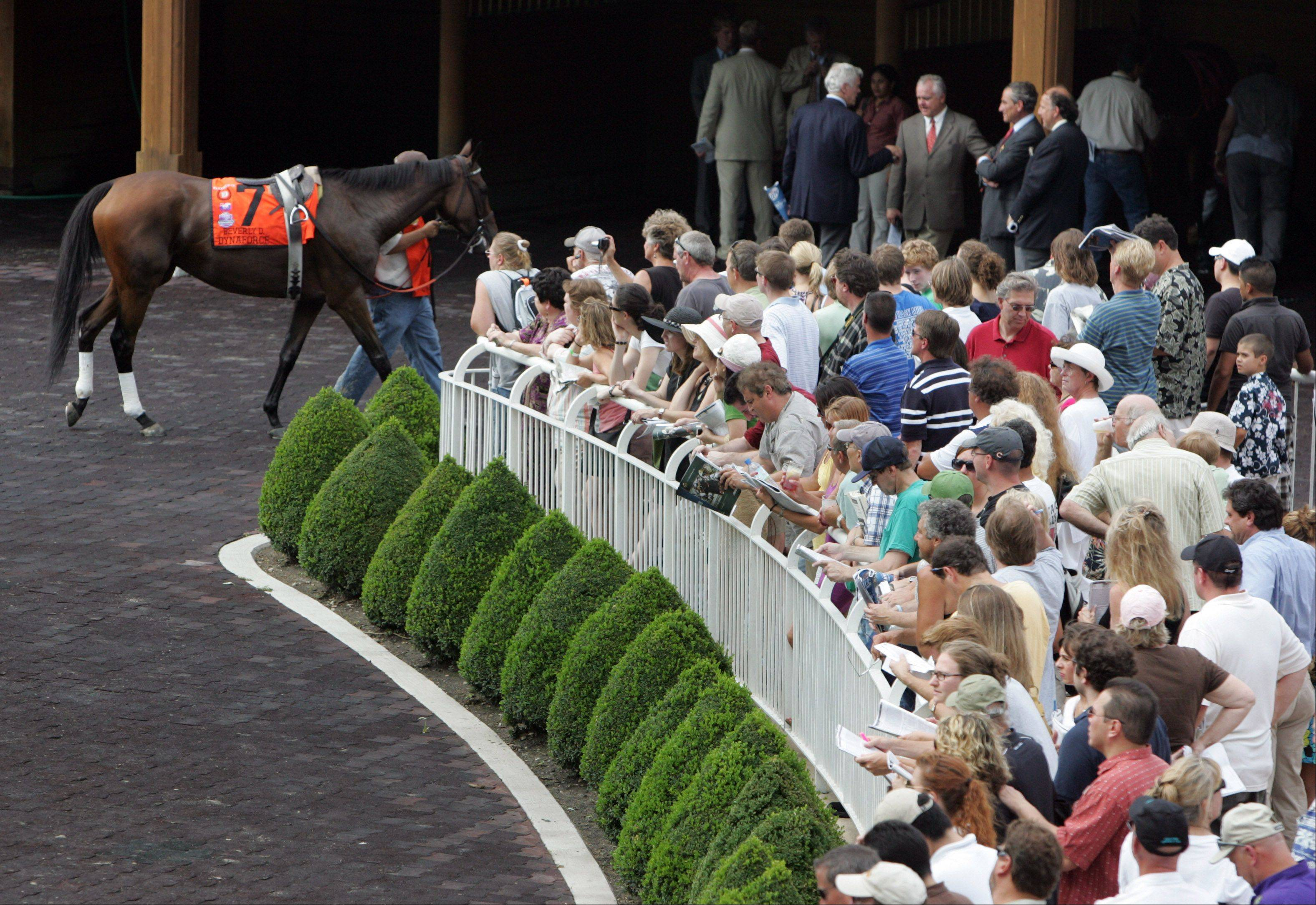 Fans looks at the horses before the start of the 27th Arlington Million.