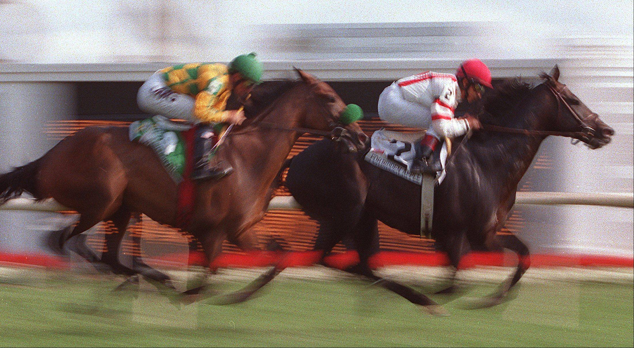 The Number 2 horse, Forbidden Apple battles against Number 5 Mystery Giver in the early stages of the 2002 Arlington Million.