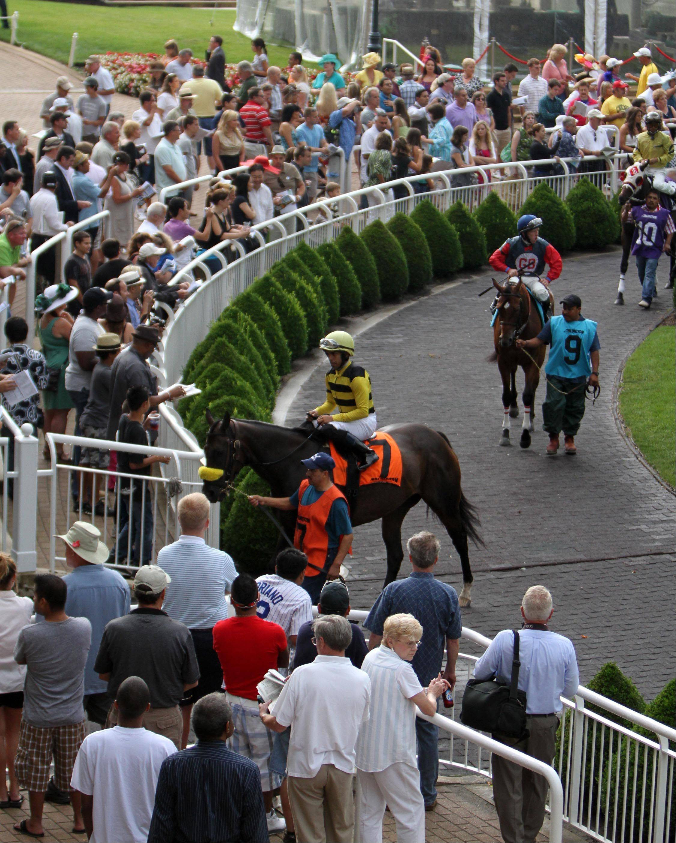 Horses on parade before an early race at Arlington Park on Saturday.