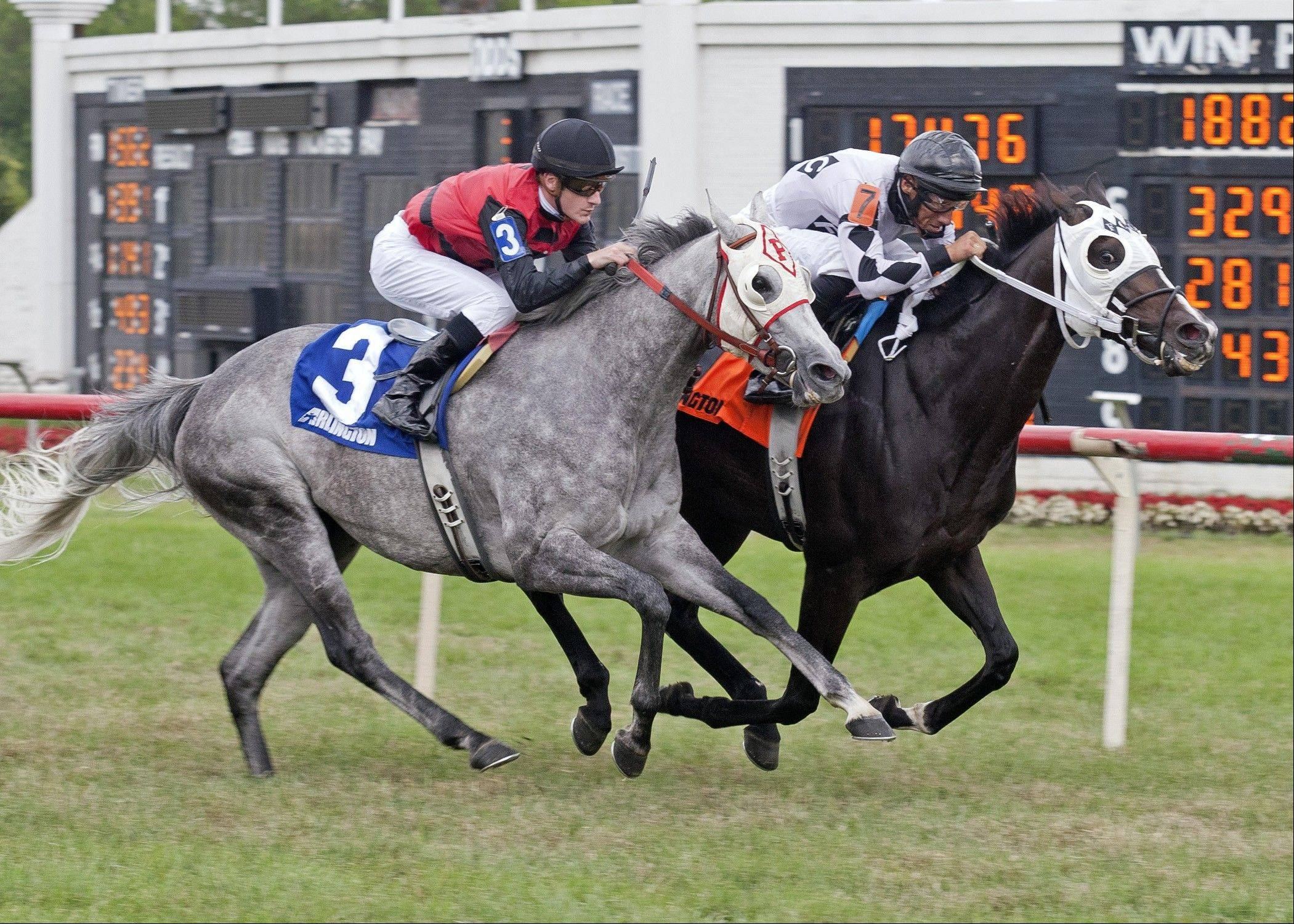 With jockey Francisco Torres aboard, Romacaca won the Modesty Handicap at Arlington Park in July. Now the mare, trained by Danny Miller of Palatine for owner Frank Calabrese, will go for her biggest win ever in Saturday's Beverly D. stakes race.