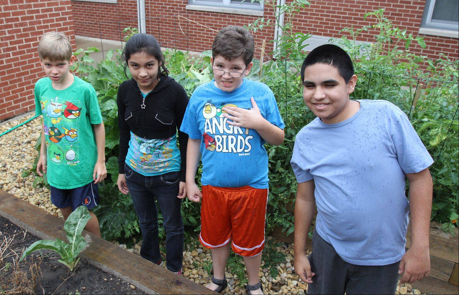 Summer school students Jack Ausnehmer, left to right, Alondra Ramos, Michael Ausnehmer and Luis Rodriguez help harvest vegetables at London Middle School's garden in Wheeling. The school's garden benefits the food pantries through the Giving Garden program.