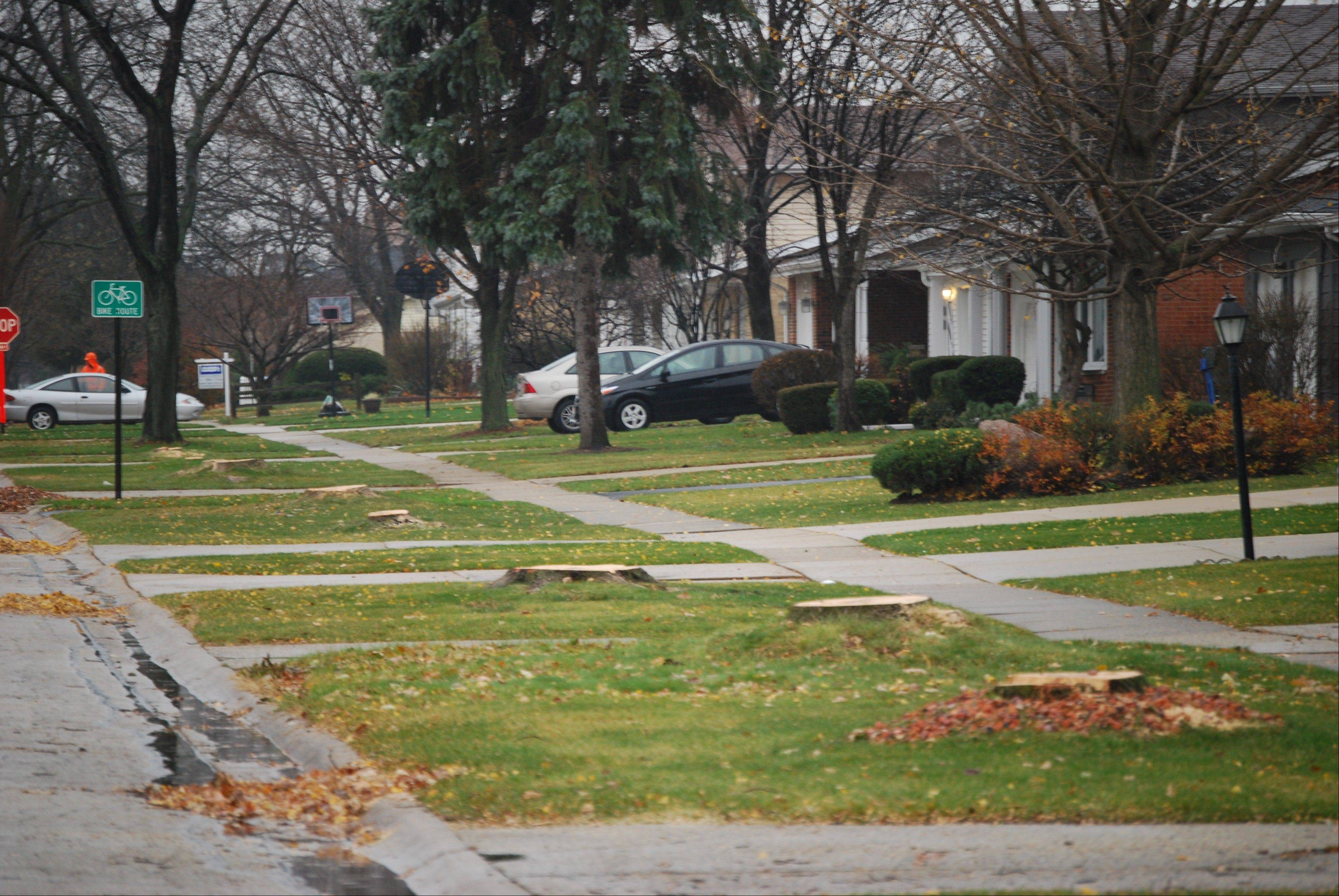 The 1800 block of Willow Lane in Mount Prospect looks barren after the parkway trees were removed.