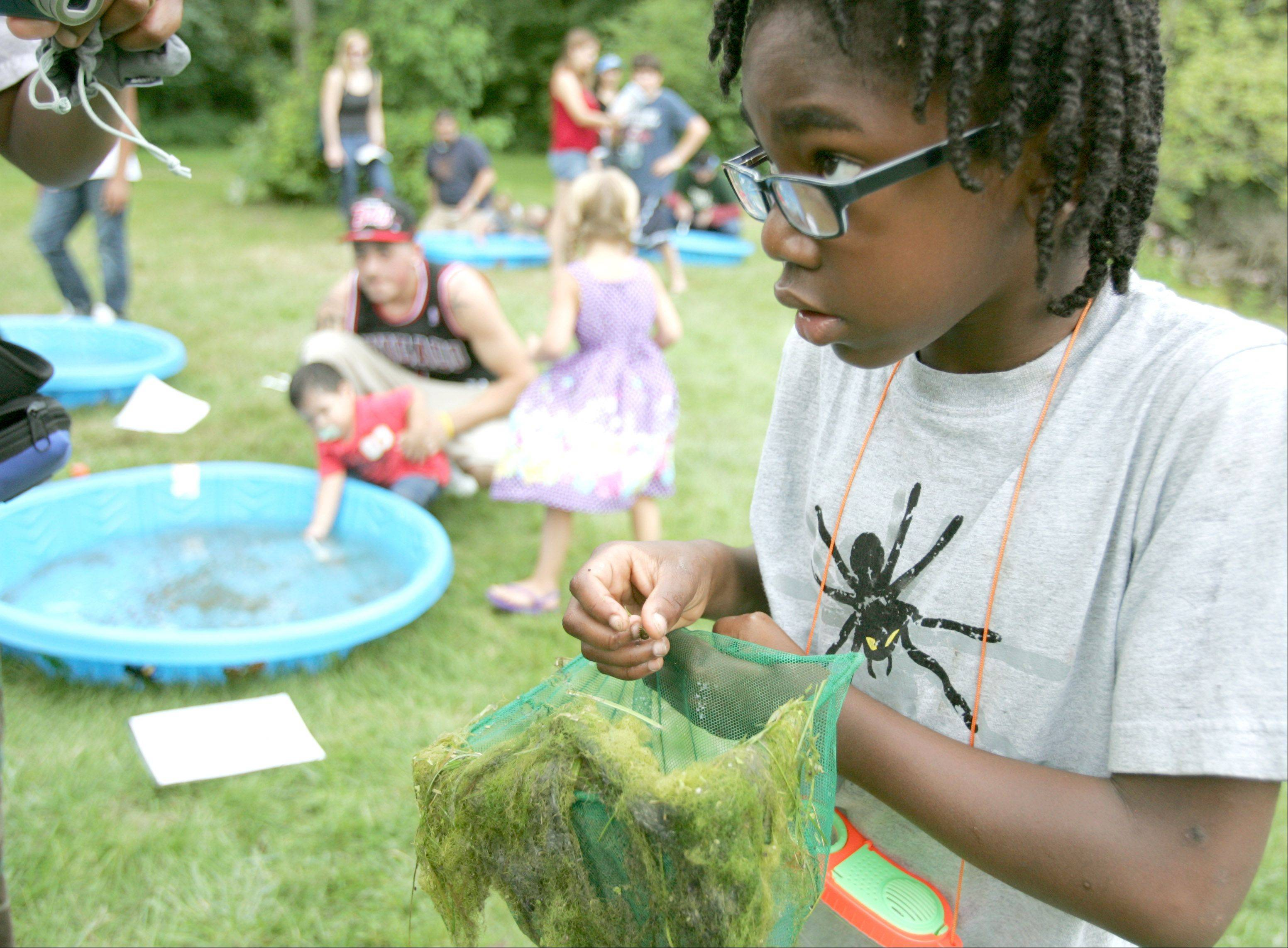 Antonio Houston, 8, of Aurora investigates dragonfly larvae during last year's Bug Fest at the Red Oak Nature Center in North Aurora. This year's festival is set for 9 a.m. to 1 p.m. Saturday, Aug. 25.