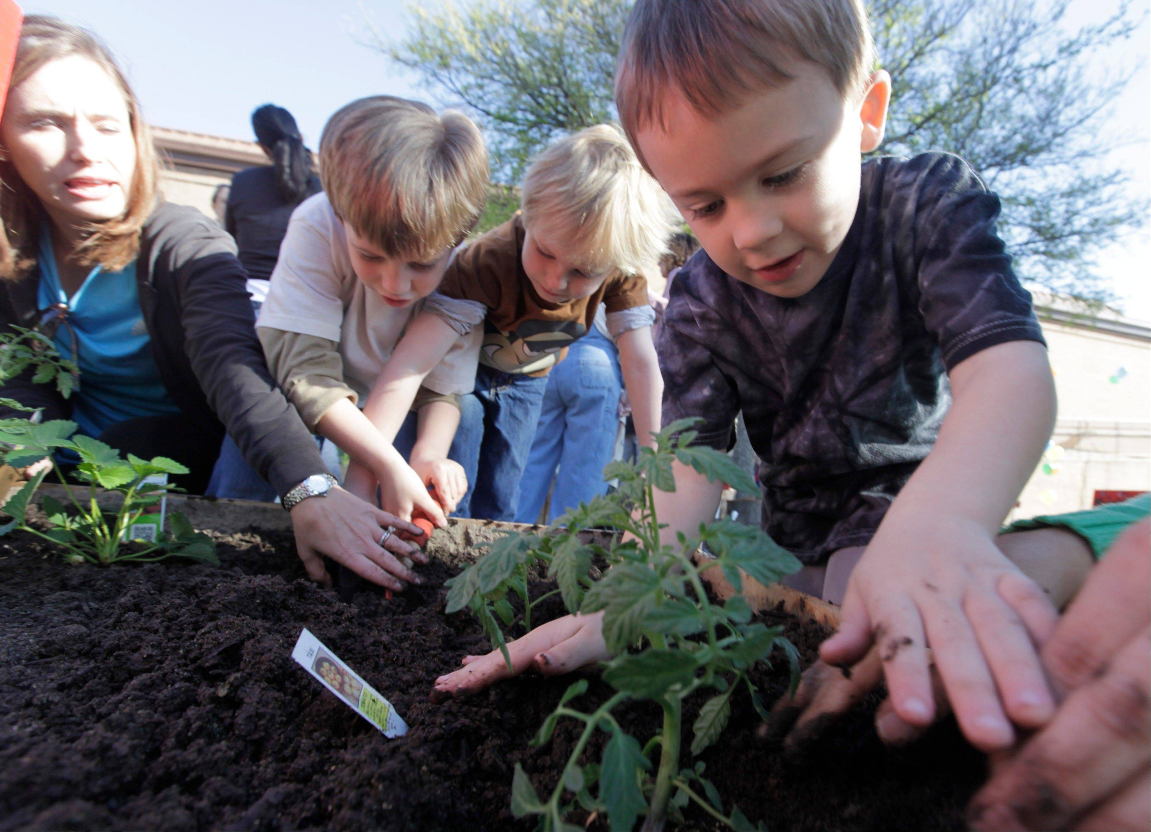 Kindergartner Ryan Crawford, 5, right, plants vegetables with fellow students at Moss Haven Elementary school in Dallas, Texas. Gardens planted in schoolyards nationally are intended to encourage healthier eating, and also teach young students about the environment, science, teamwork, math and leadership.