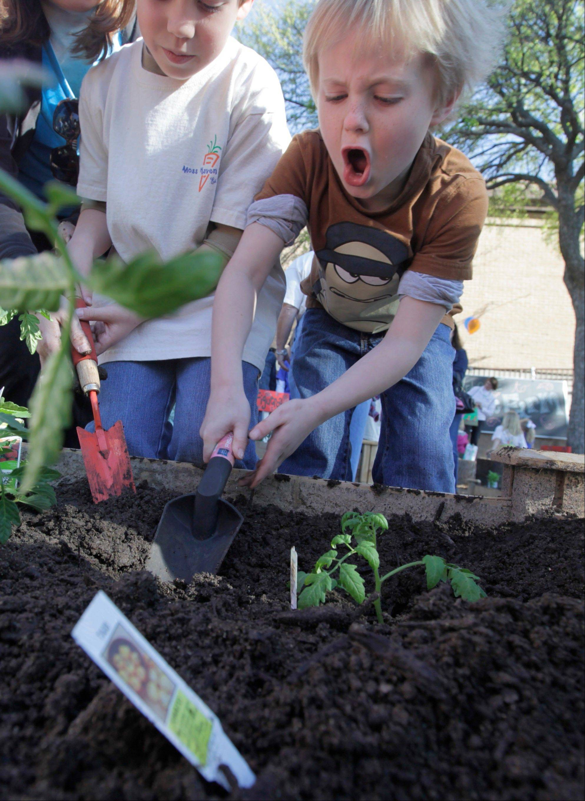 Elementary students plant vegetables in a garden at Moss Haven Elementary school in Dallas, Texas. Gardens planted in schoolyards nationally are intended to encourage healthier eating, and also teach young students about the environment, science, teamwork, math and leadership.