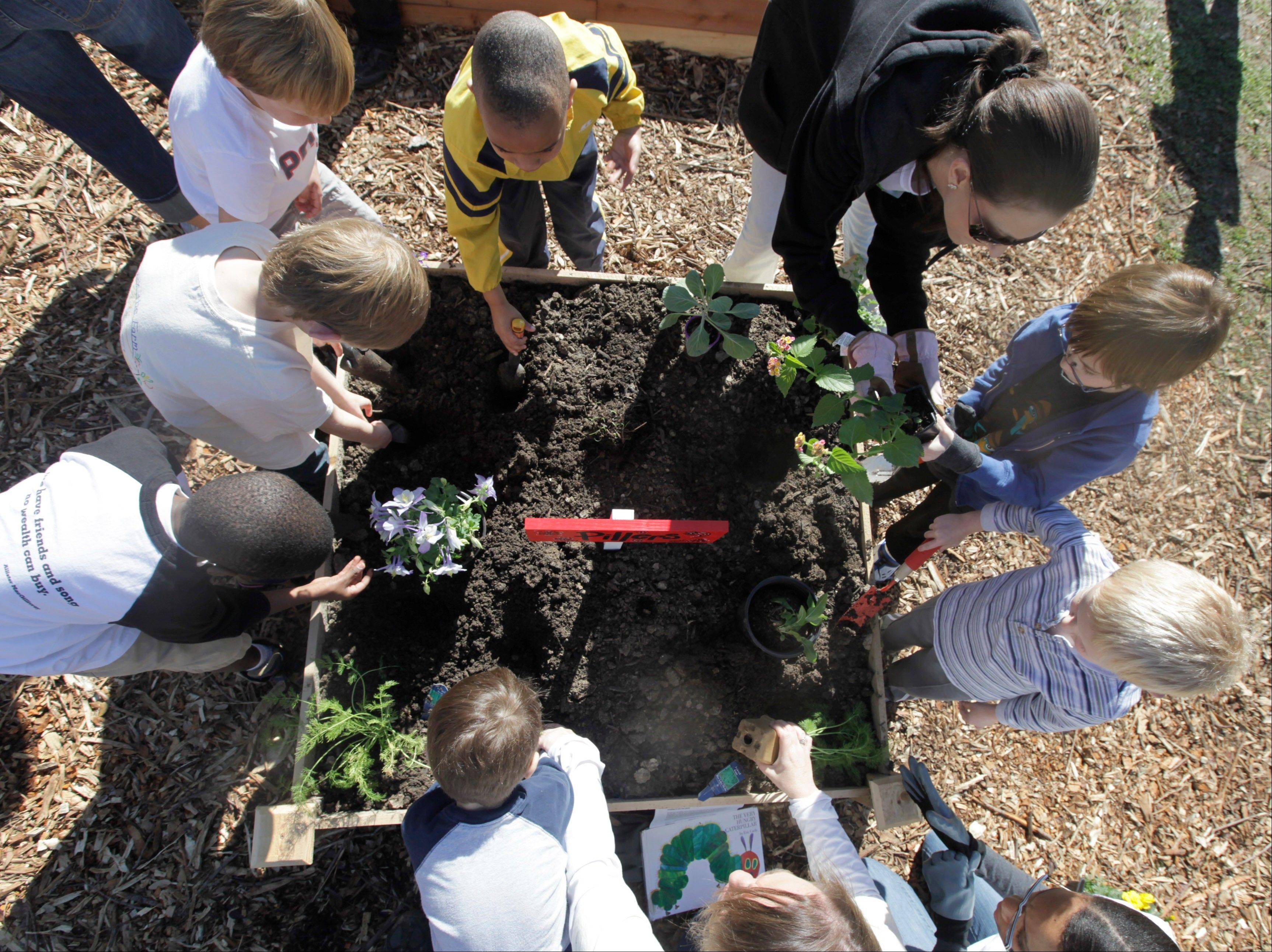 Kindergartners at Moss Haven Elementary school work in a student garden in Dallas, Texas. Gardens planted in schoolyards nationally are intended to encourage healthier eating, and also teach young students about the environment, science, teamwork, math and leadership.