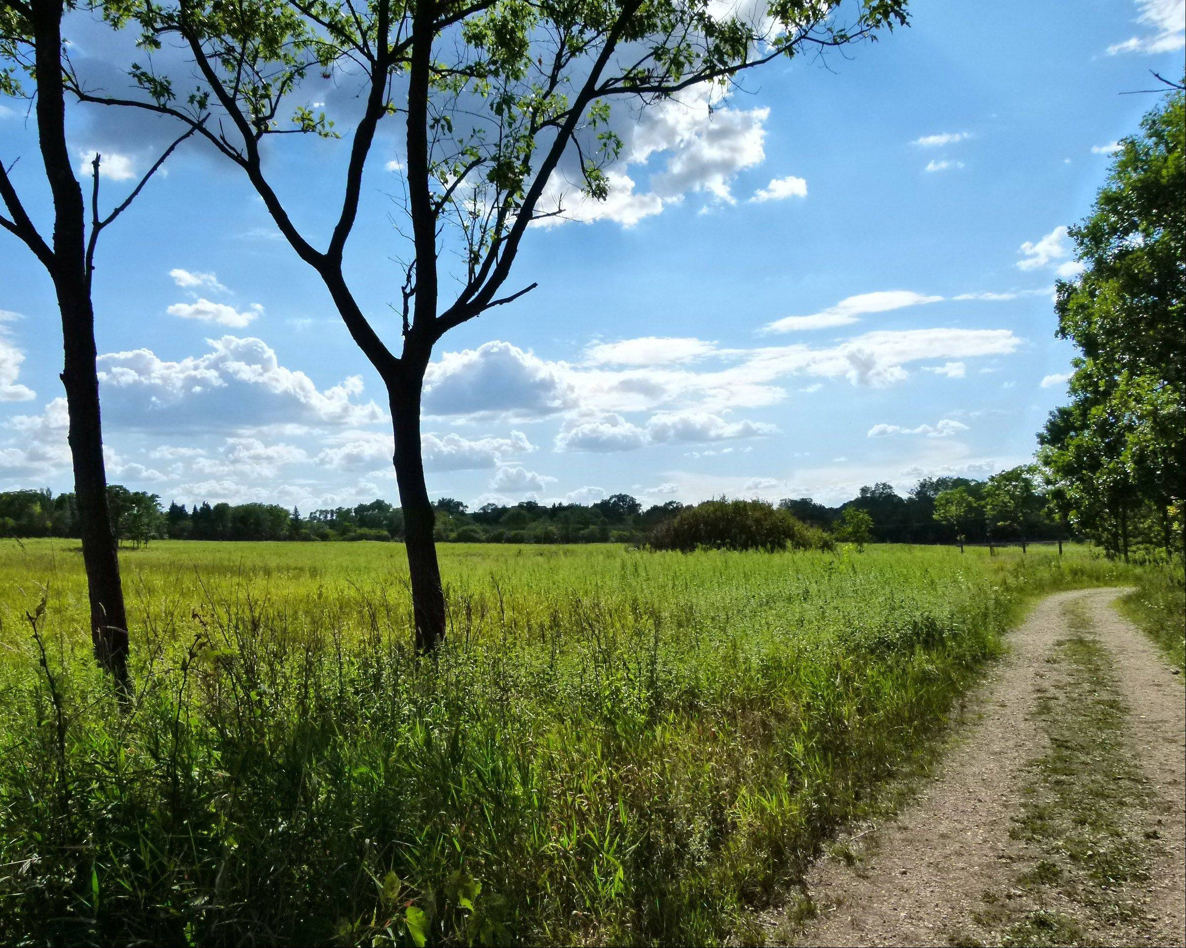 "Lena Conway of Naperville visited the Morton Arboretum's prairie for the first time and was stunned by the variety of plants and insects. ""It gave me so much peace and joy to stroll its paths,"" she says."