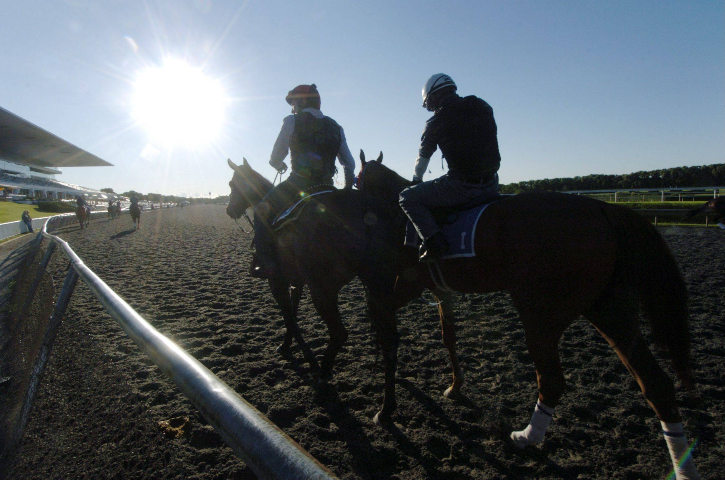 Horses enter the track during the morning workout Friday on the eve of the Arlington Million at Arlington Park.