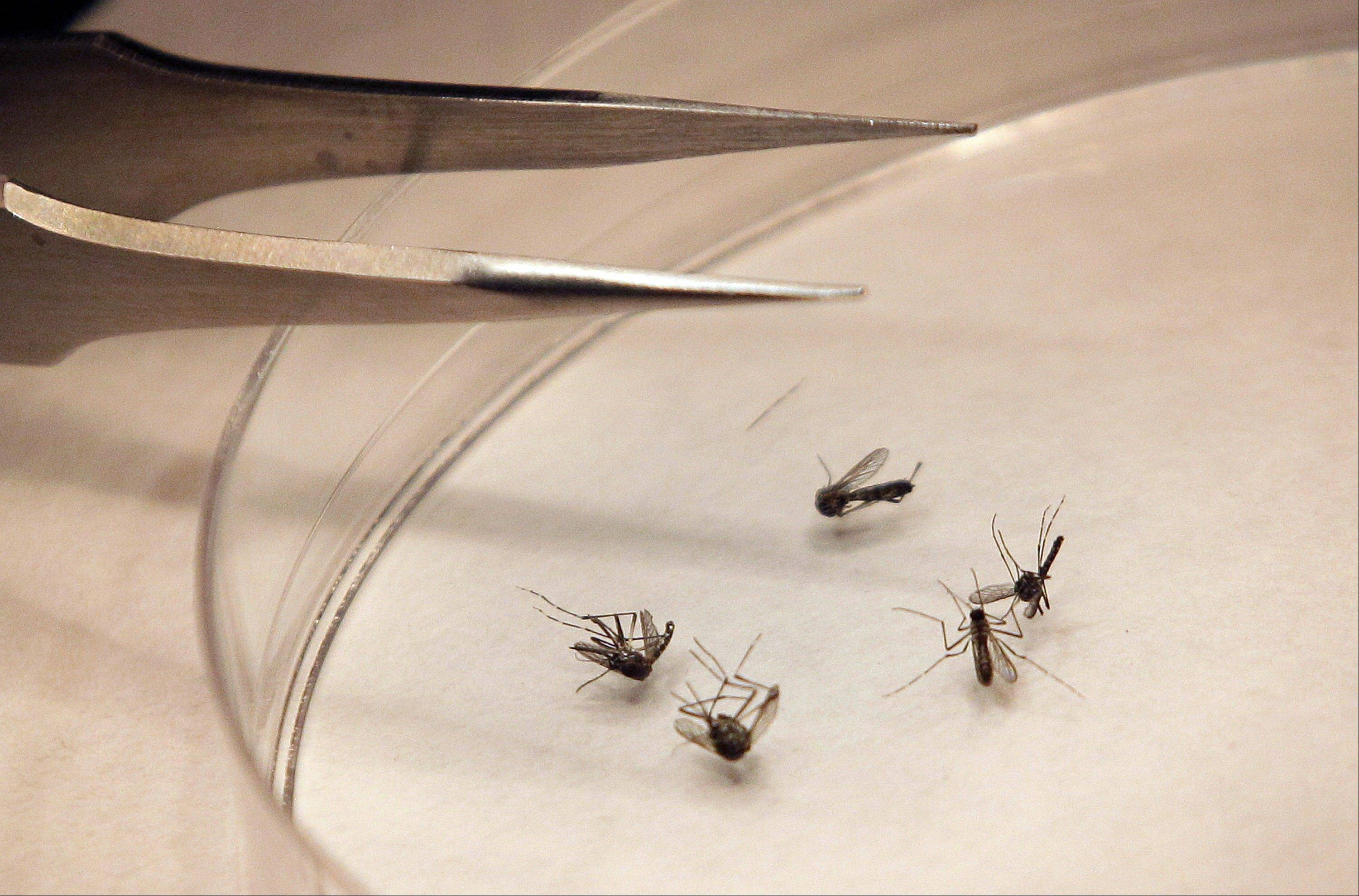 CDC: West Nile cases rise 40 percent in 1 week
