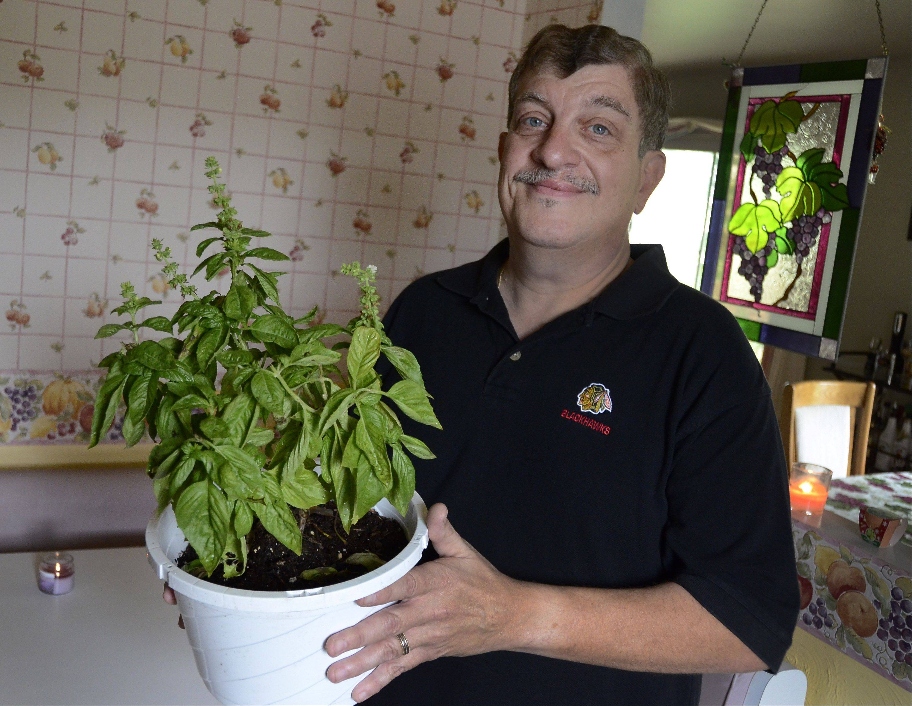 Bill Zars/bzars@dailyherald.comFormer cook of the week Chuck Federici of Hanover Park grows fresh basil for his recipes and is competing for the cook of the year title..