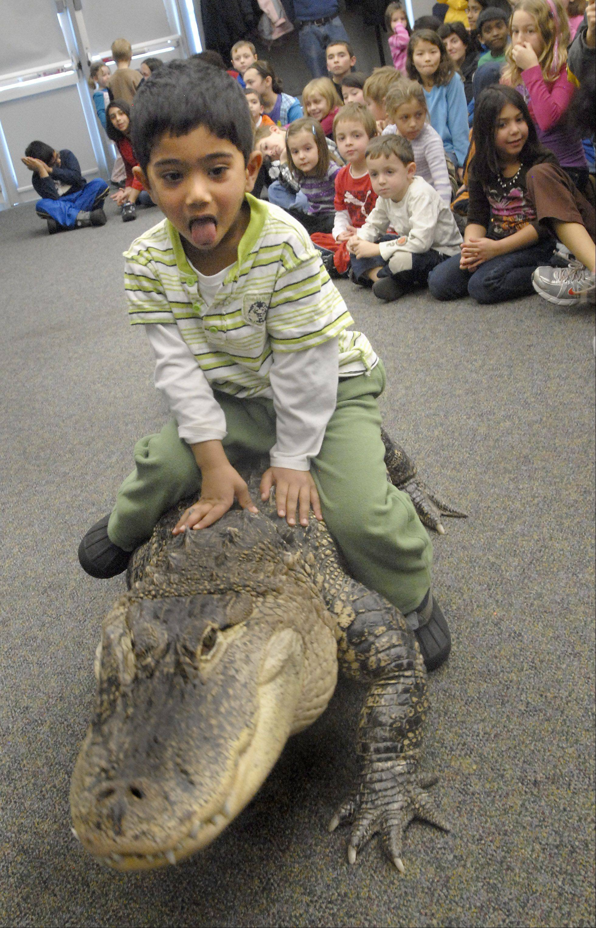 Kids can meet an 8-foot long, 200-pound American Alligator named Bubba during the Cold Blooded Creatures show at Last Fling in Naperville.