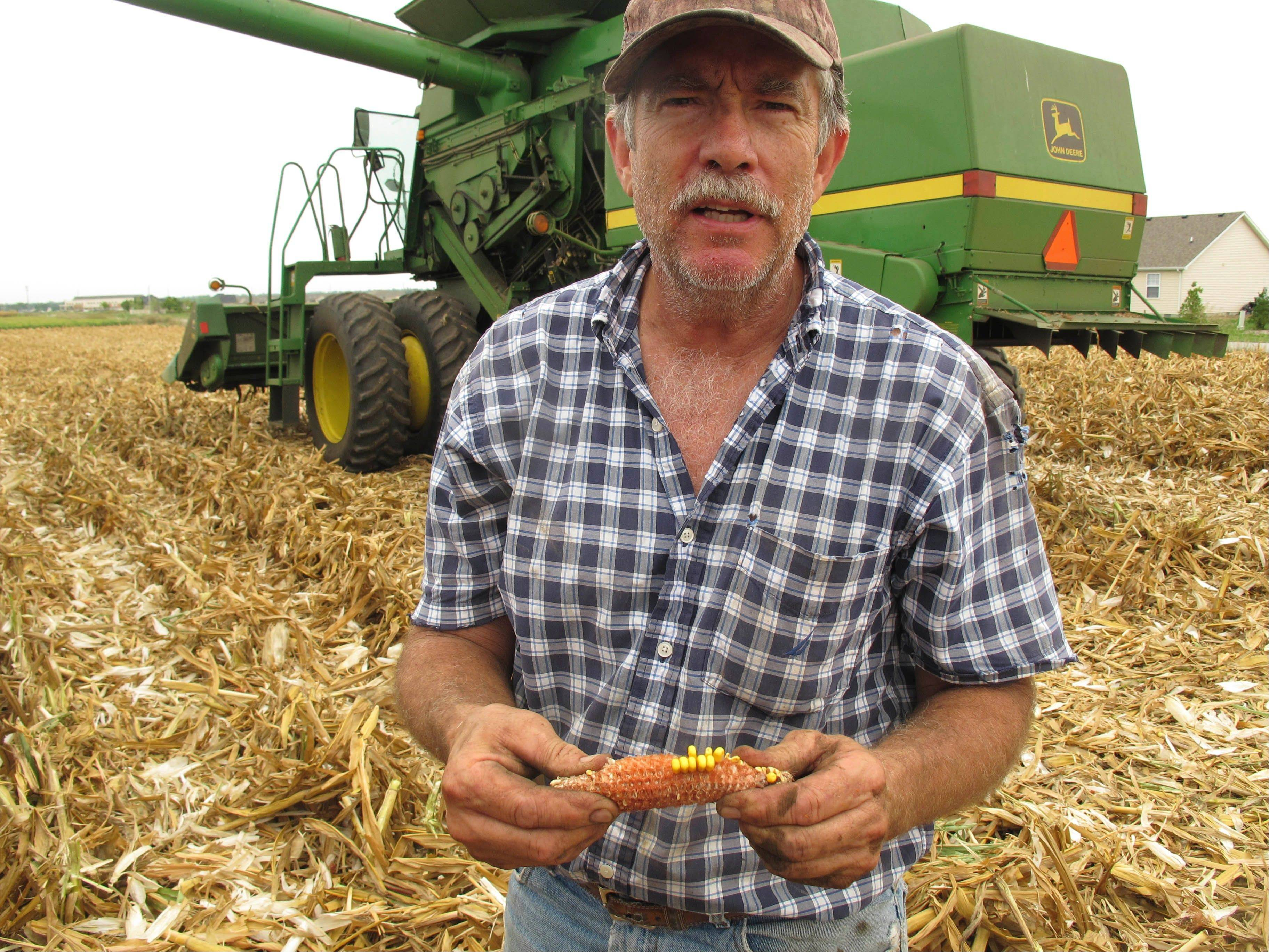 Farmer Chris Wise stands in one of his fields Friday just south of Champaign and holds an ear of corn hurt by weeks of drought. Wise was scrambling Friday to harvest ahead of the heavy rain expected from the remnants of Hurricane Isaac.