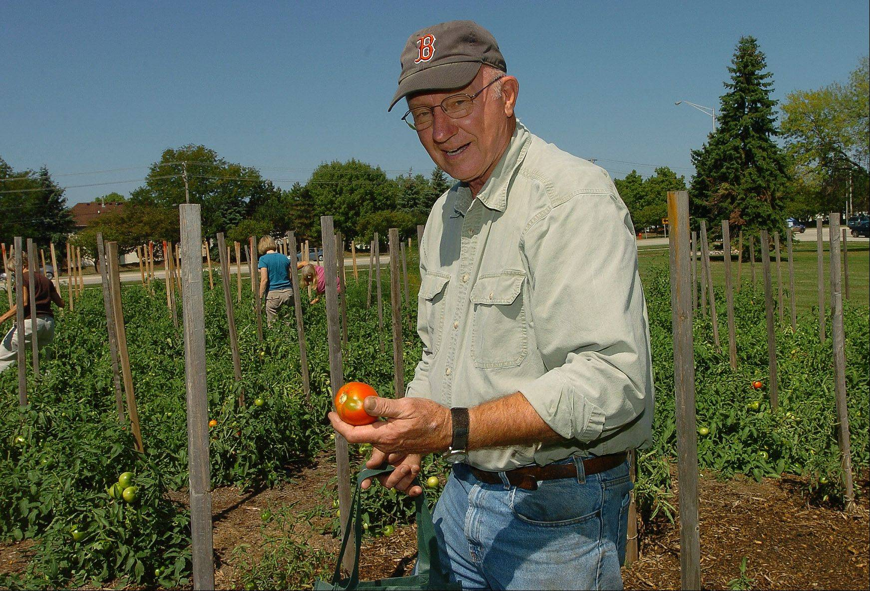 This is the fourth year that Steven Larson has led fellow congregants at Covenant Church in Schaumburg in a garden ministry, donating the harvest to the Schaumburg Township Food Pantry.