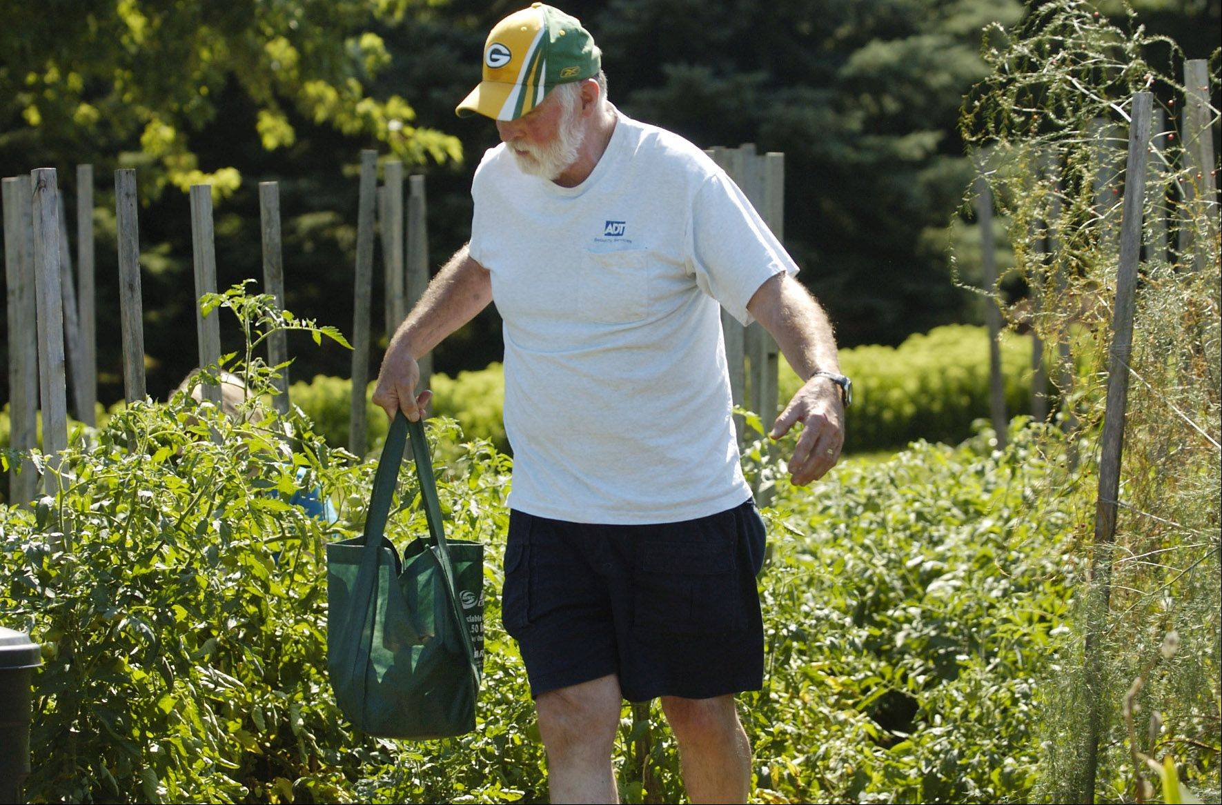 Richard Neidl carries a bag of tomatoes from the tomato garden behind Covenant Church in Schaumburg.