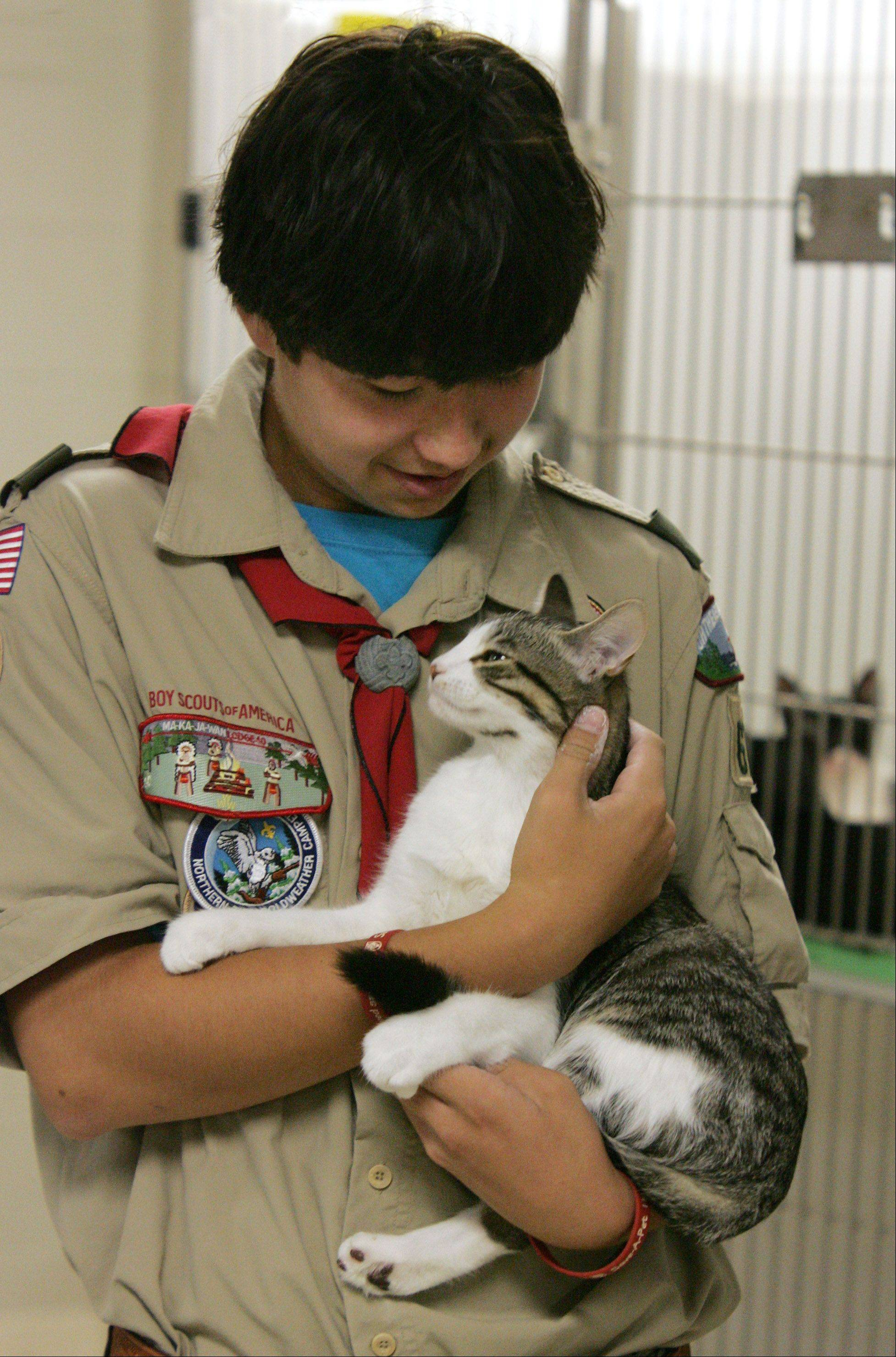 Scott Seiler, of Boy Scout Troop 671, holds Patriot, a domestic short hair cat, at Save-A-Pet Adoption Center in Grayslake Sunday. Seiler organized a face lift for the shelter's Kitten Room as part of an Eagle Scout project.