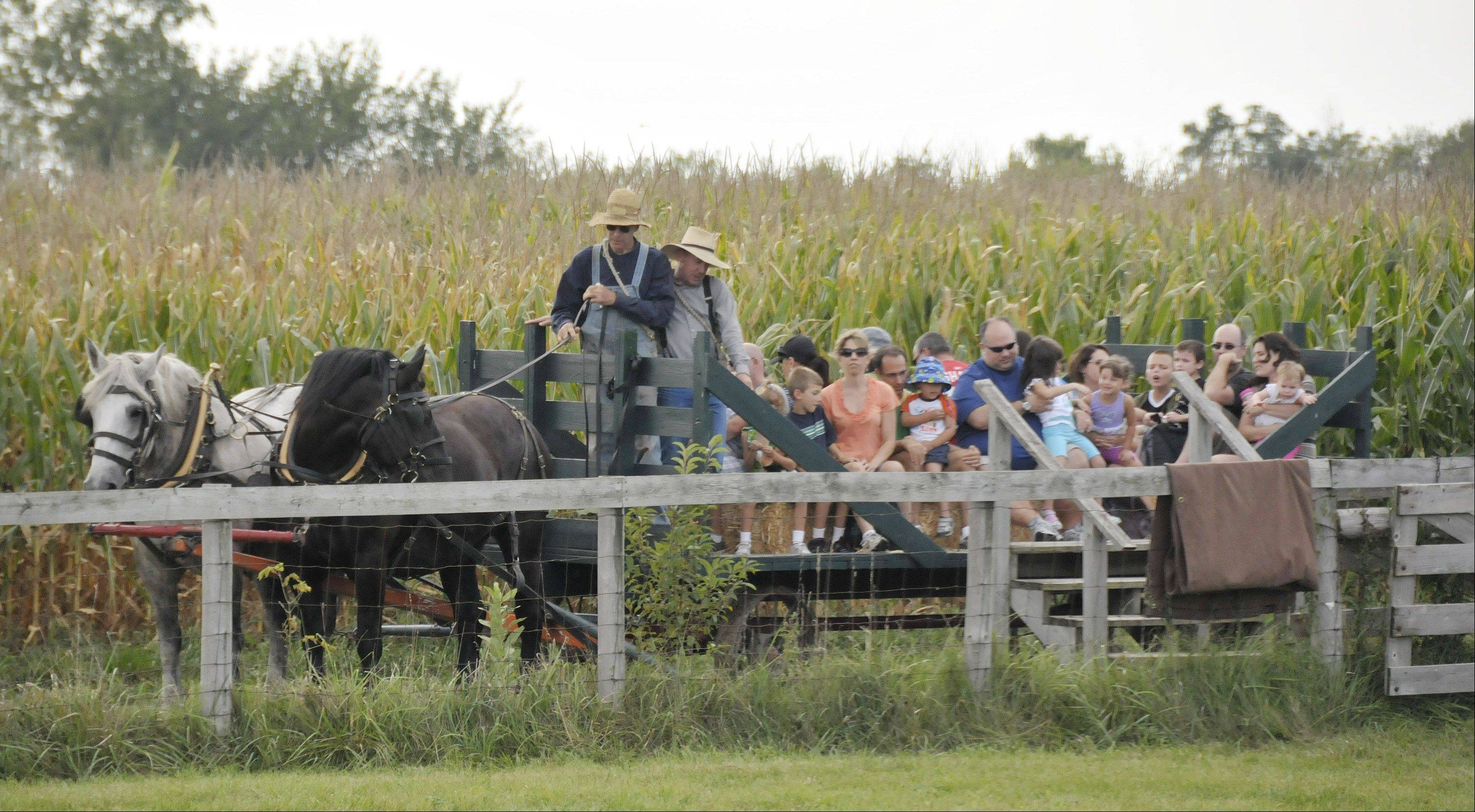 Visitors enjoyed horse-drawn hayrides during the DuPage County Forest Preserve District's old-fashioned country fair Sunday at Kline Creek Farm in West Chicago.
