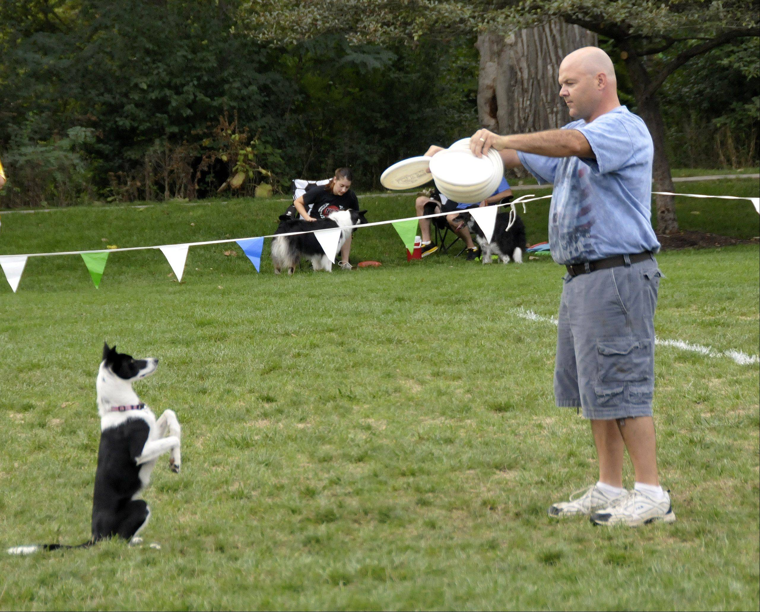 Mark Faragoi, of Plainfield, and Riley, a Border Collie, prepare to do their routine Sunday during the Ashley Whippet Invitational, a dog disc-catching competition that was part of Naperville's Last Fling.