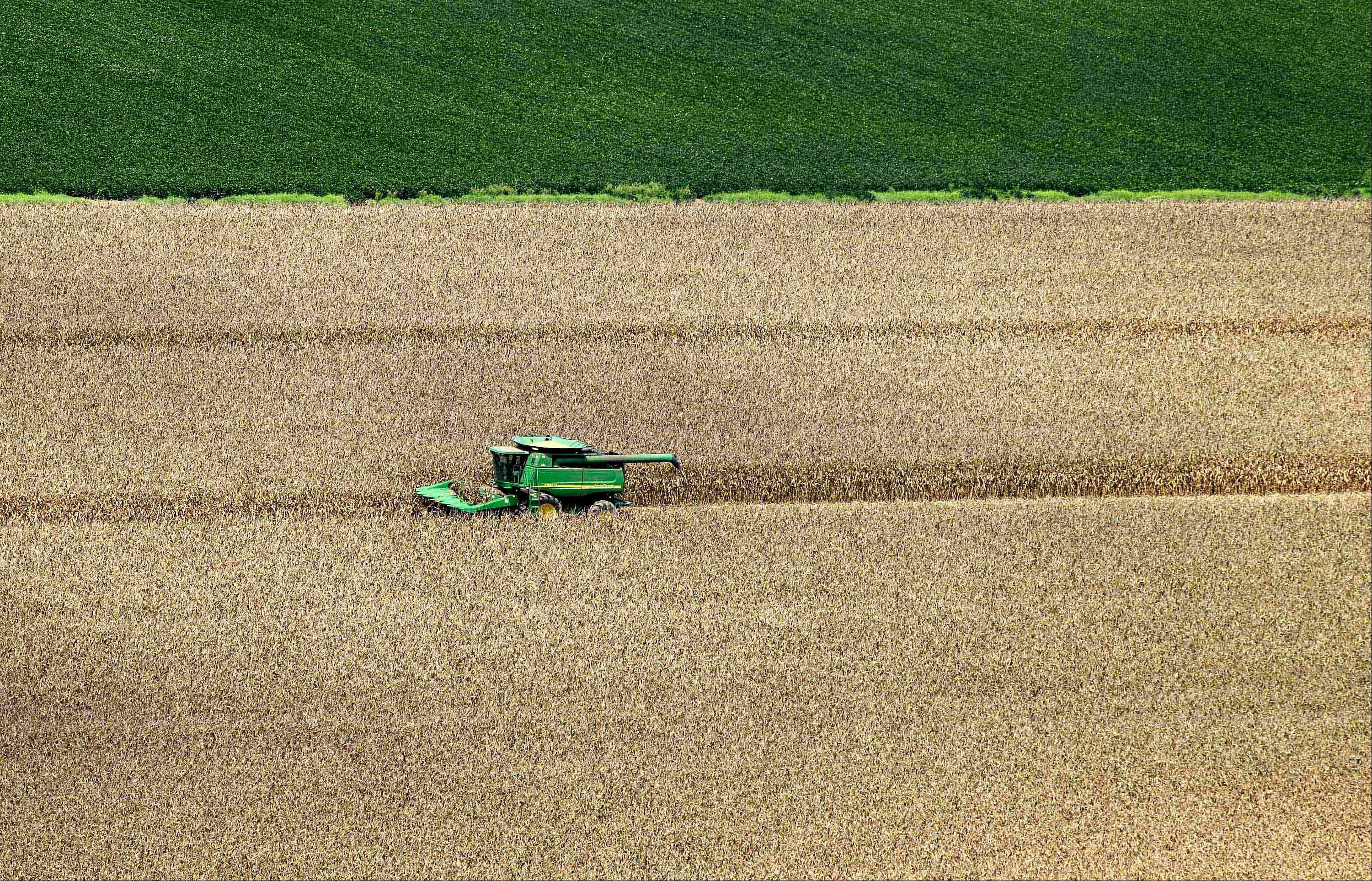 In this Aug. 16, 2012 photo, a combine harvests corn next to another field where soybeans grow near Coy, Ark. Weekend rain brought some relief to farmers in the nation�s midsection as they contend with the worst drought in the U.S. in decades.
