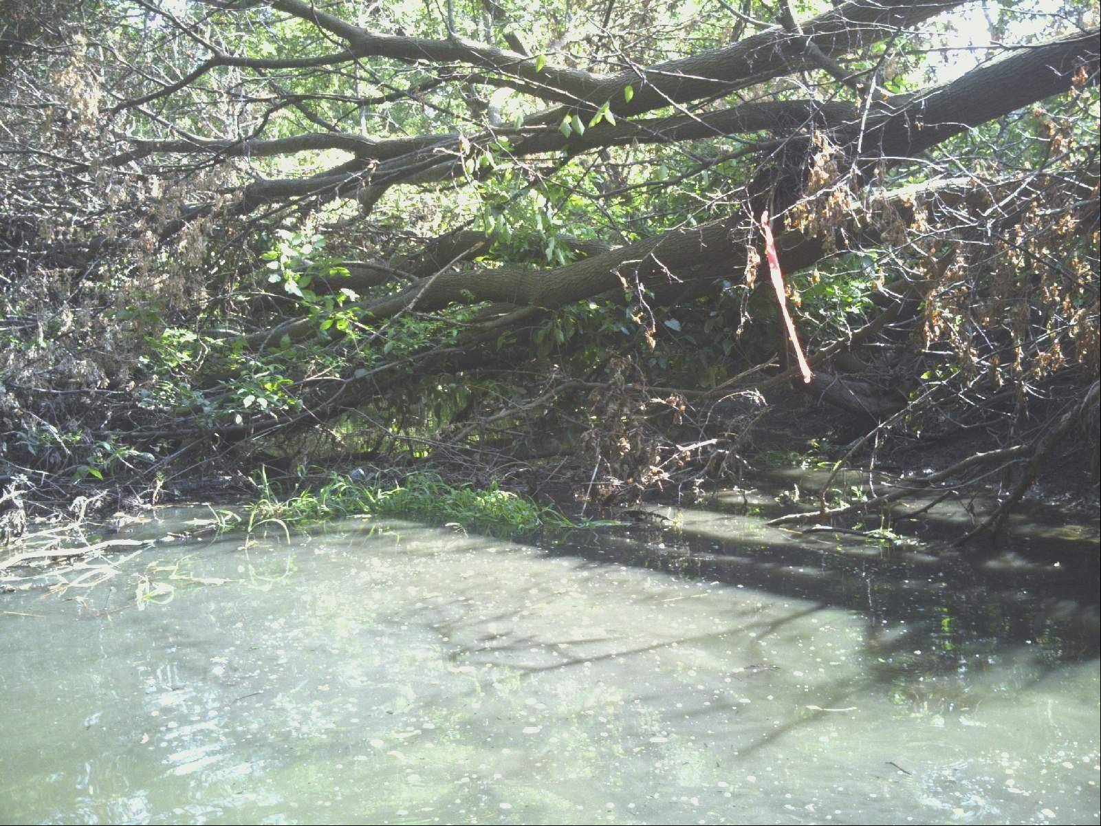 A downed tree blocks the flow of water in Klein Creek near the 400 block of Silverleaf Boulevard in Carol Stream. Village officials say such major obstructions will be removed by a contractor this fall.