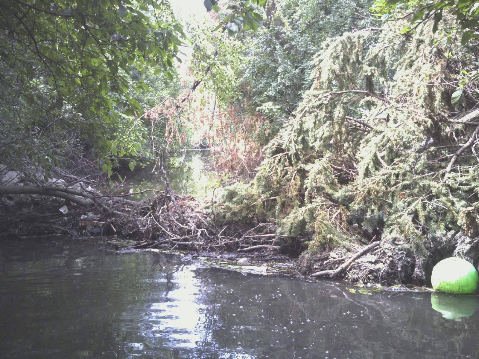 A pine tree blocks the flow of water in Klein Creek near the 100 block of Arrowhead Trail in Carol Stream.