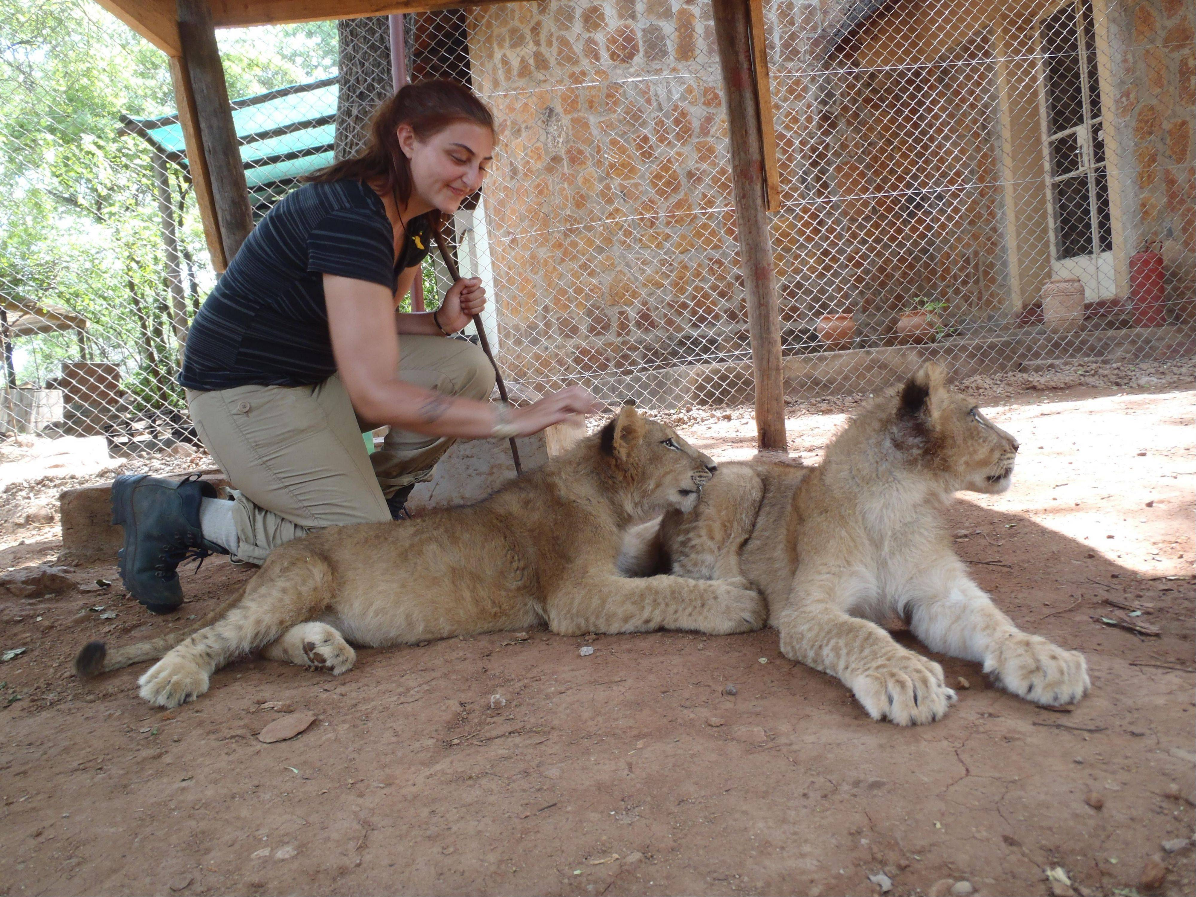 Dana de Grazia helped raise lion cubs as part of her volunteer work with ALERT, the African Lion and Environmental Research Trust in Zambia.