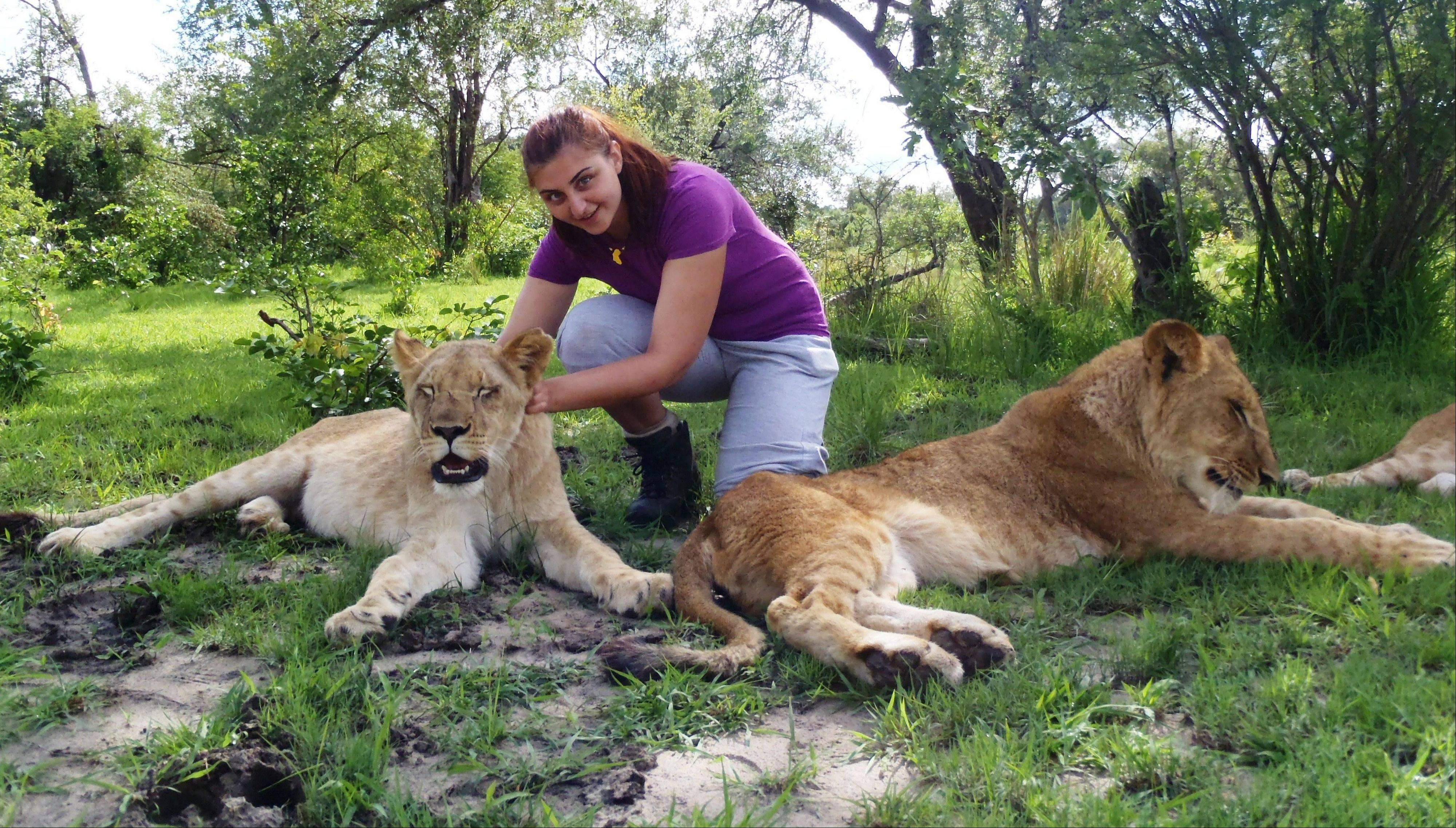 Dana de Grazia helped raise lion cubs as part of her volunteer work with the African Lion and Environmental Research Trust in Zambia.