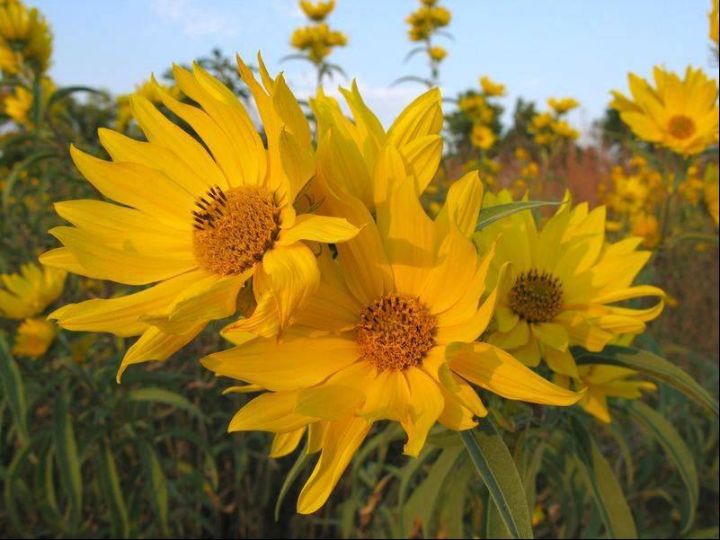 Lake-to-Prairie, a chapter of Wild Ones, a national not-for-profit organization that promotes the use of native plants in landscapes, is hosting a field trip to Illinois Beach State Park in Zion Sept. 15.