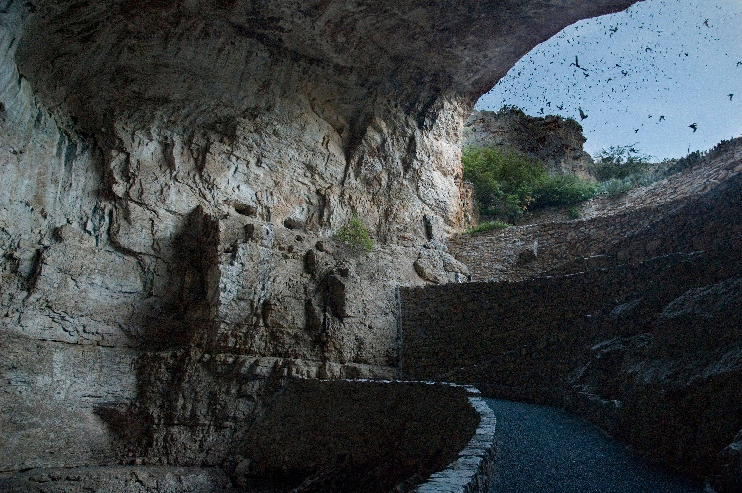 Each night thousands of bats emerge from Carlsbad Caverns in New Mexico.