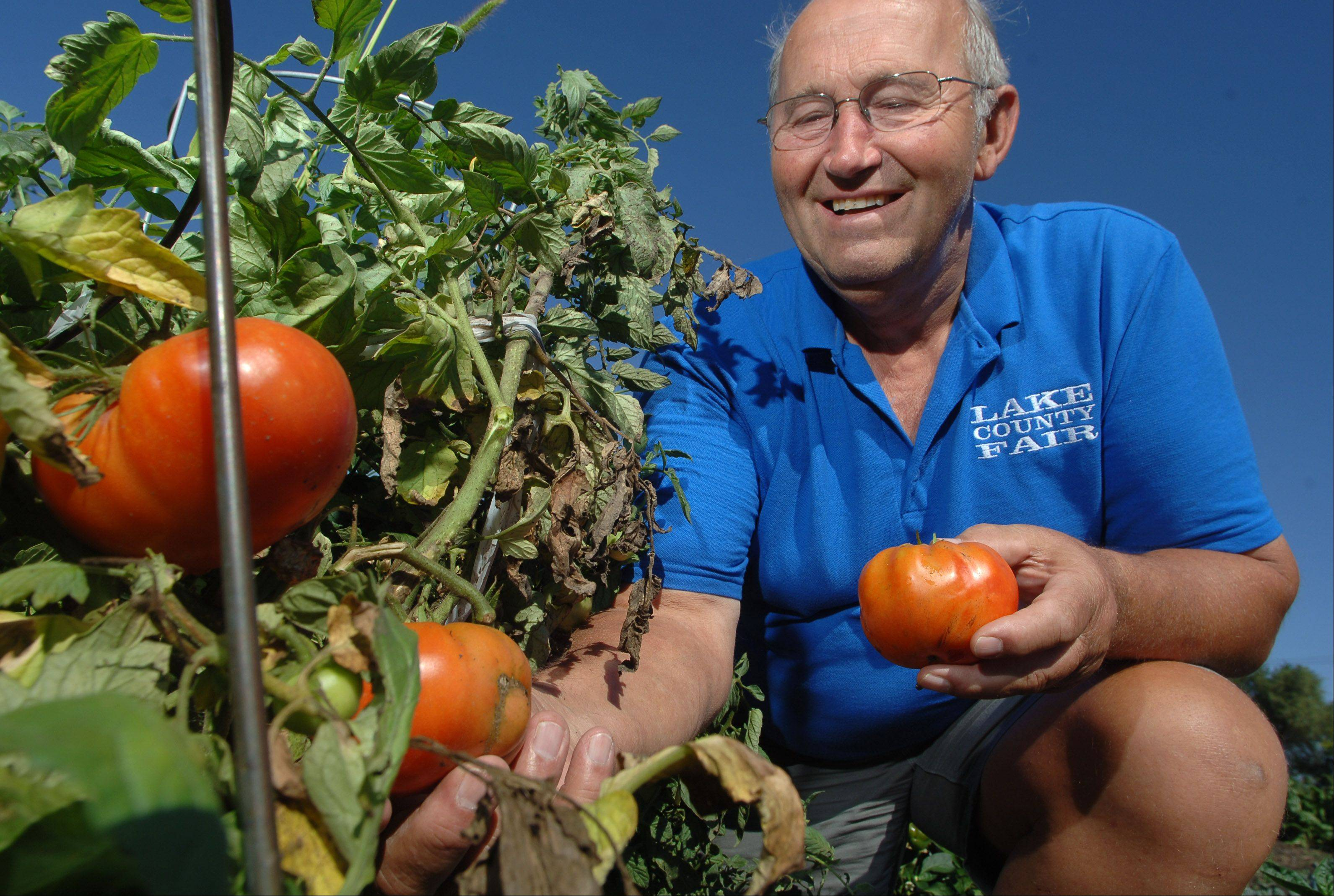 Fremont Township Supervisor Pete Tekampe looks over tomatoes in the township�s garden, which supplies the food pantry.