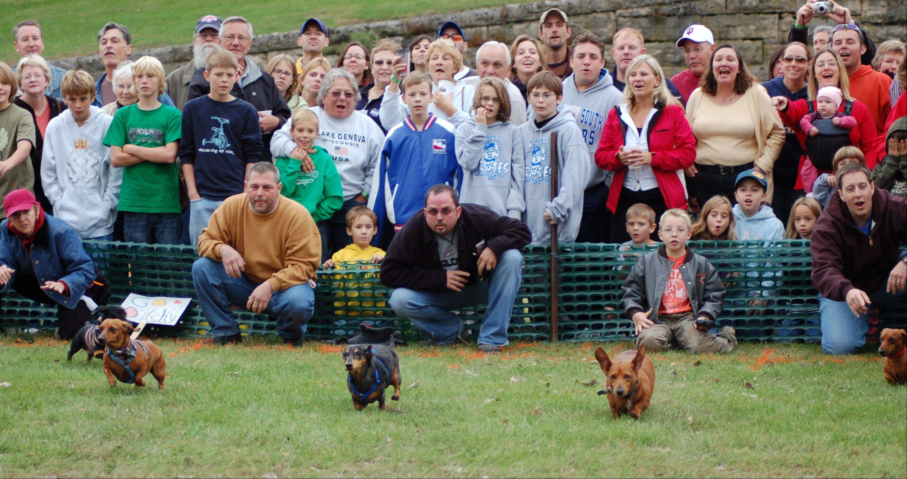 Onlookers cheer on their favorite wiener dog in the championship race at the Galena Oktoberfest, Sept. 22.