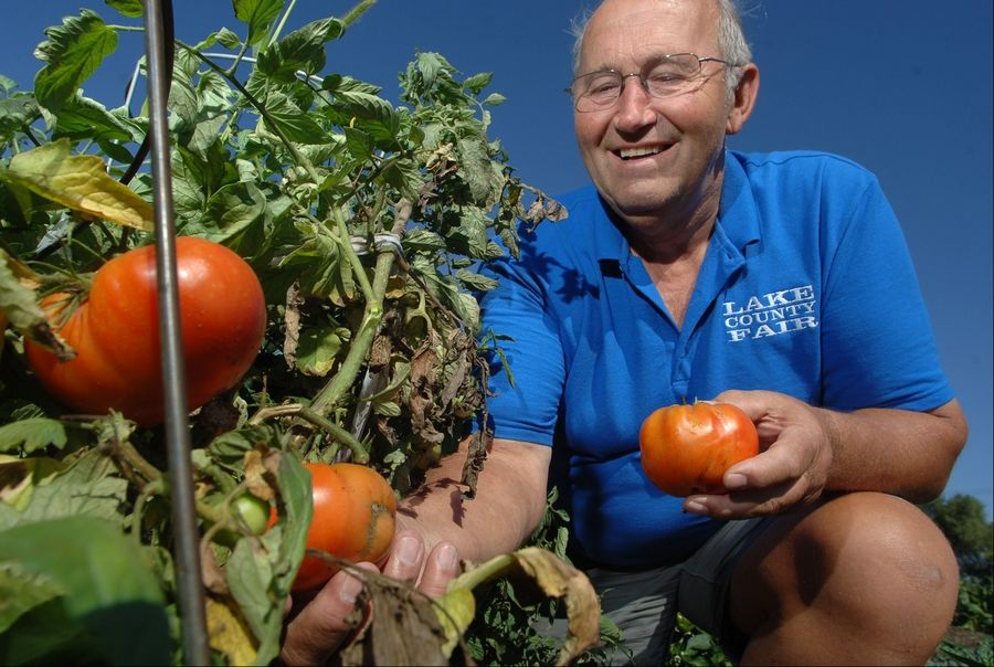 Fremont Township Supervisor Pete Tekampe looks over tomatoes in the township's garden, which supplies the food pantry.