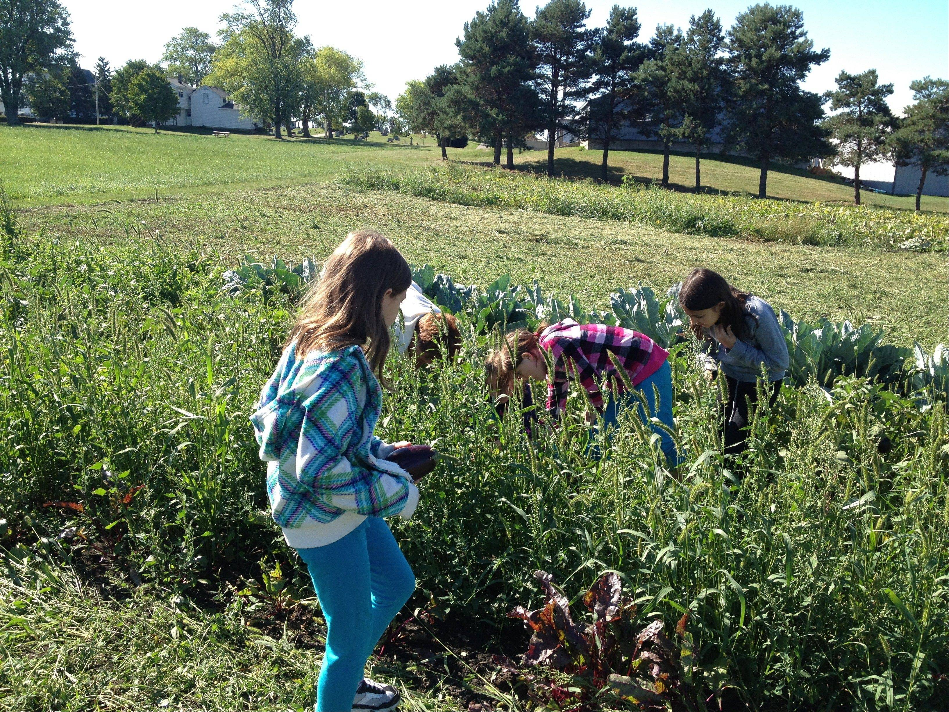 Members from Brownie Troop 41003, based at Fremont School in Mundelein, work in the garden at Fremont Township offices.