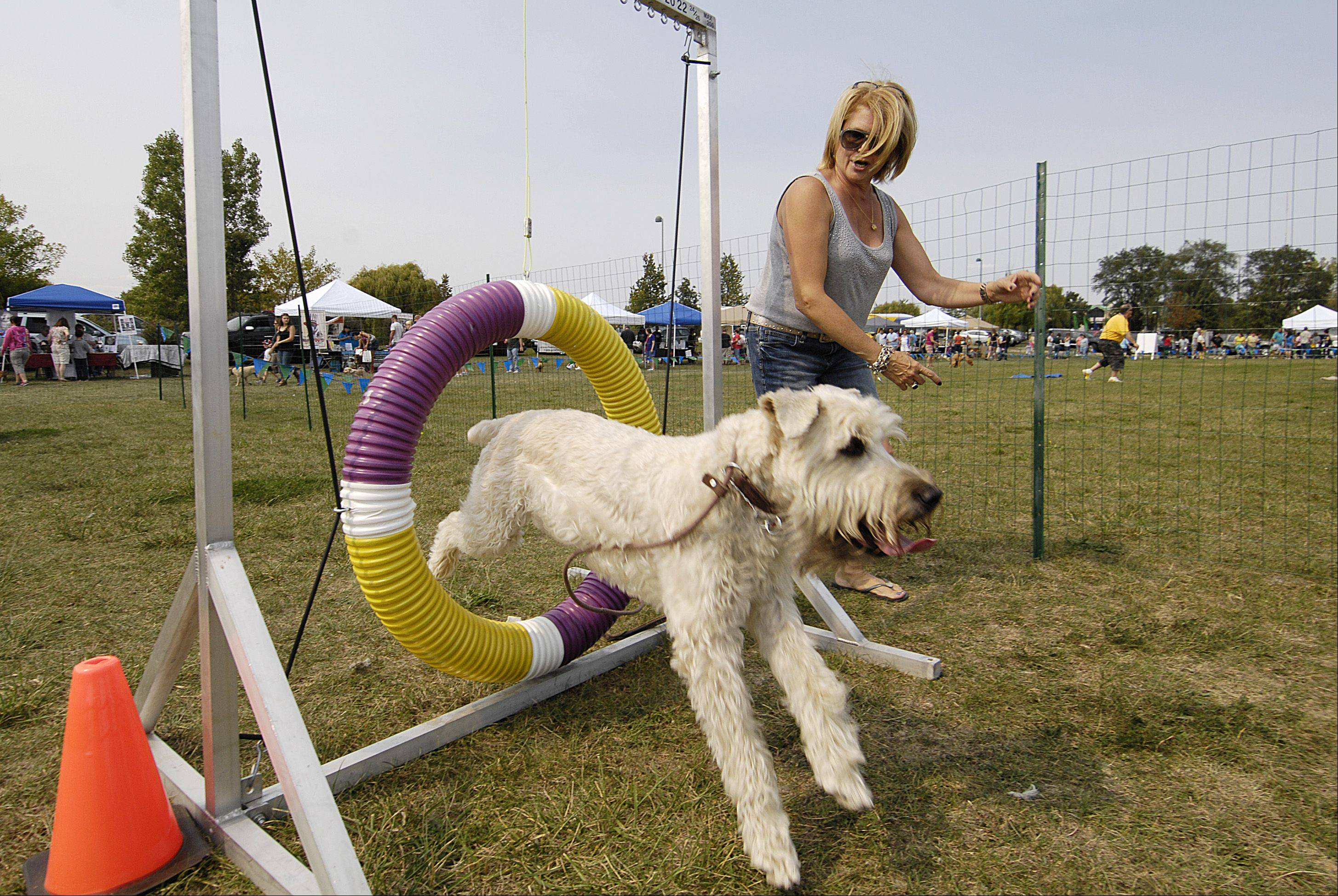 "Linda Heller, of Arlington Heights, and her dog ""Duke,"" try out an agility course Sunday during the CSBarks Dog Festival at the Town Center in Carol Stream."