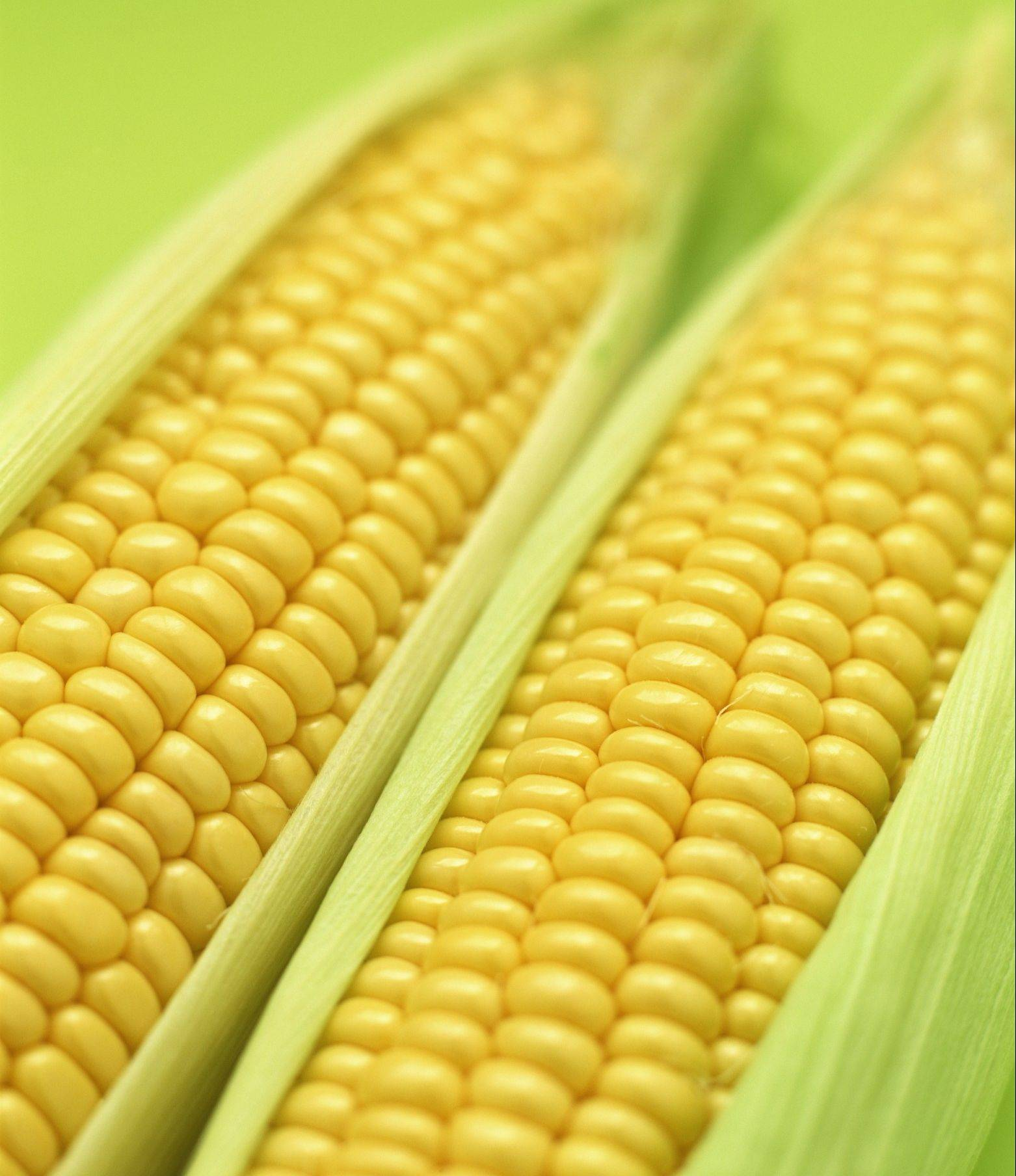 Corn can be healthy for you, if you eat it in moderation with other healthy foods.