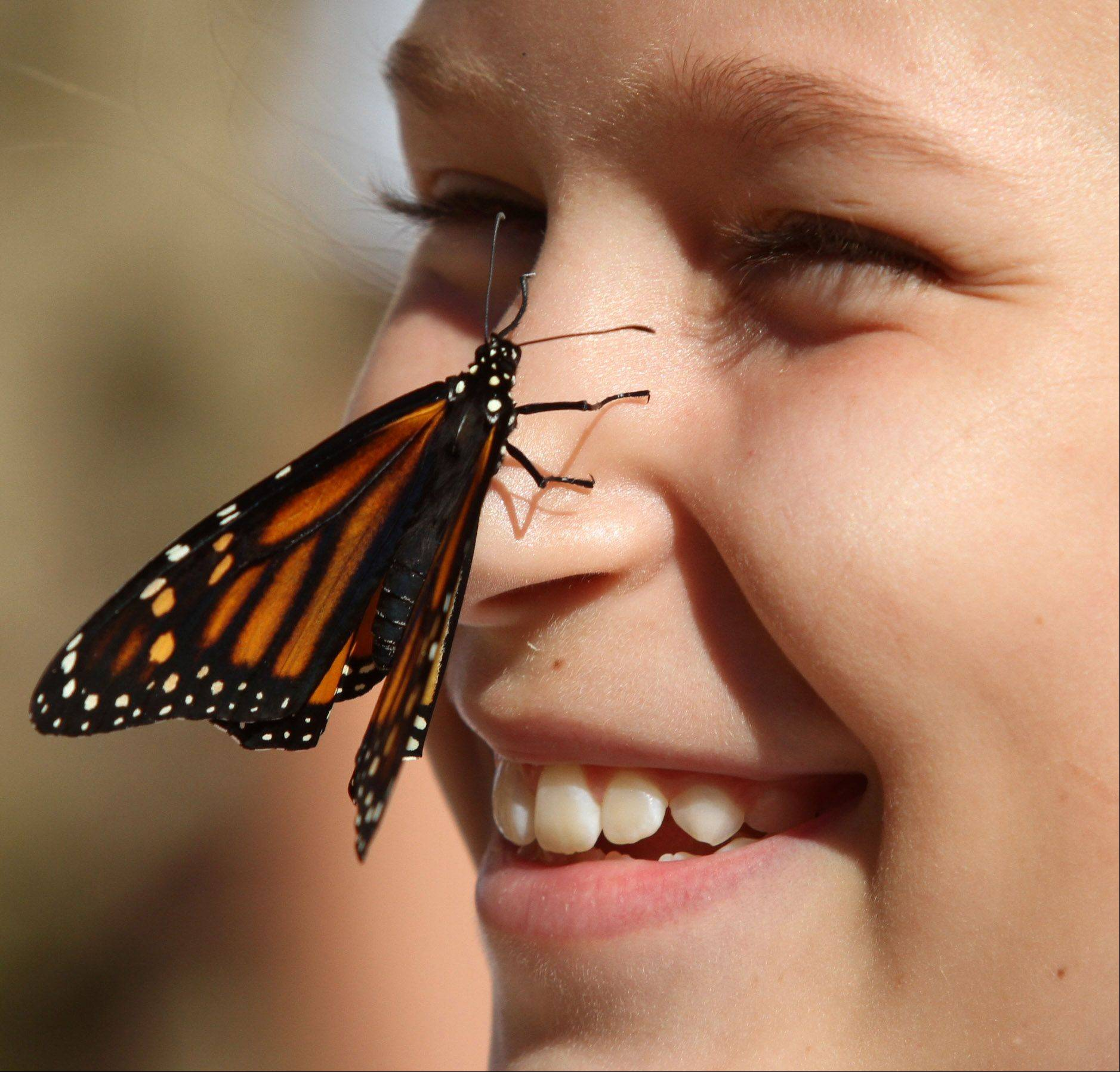 Seventh-grader Mackenzie Kamysz has a monarch butterfly released from her noise outside during Nancy Gottung's science class at St. James School in Arlington Heights on Tuesday, September 11.