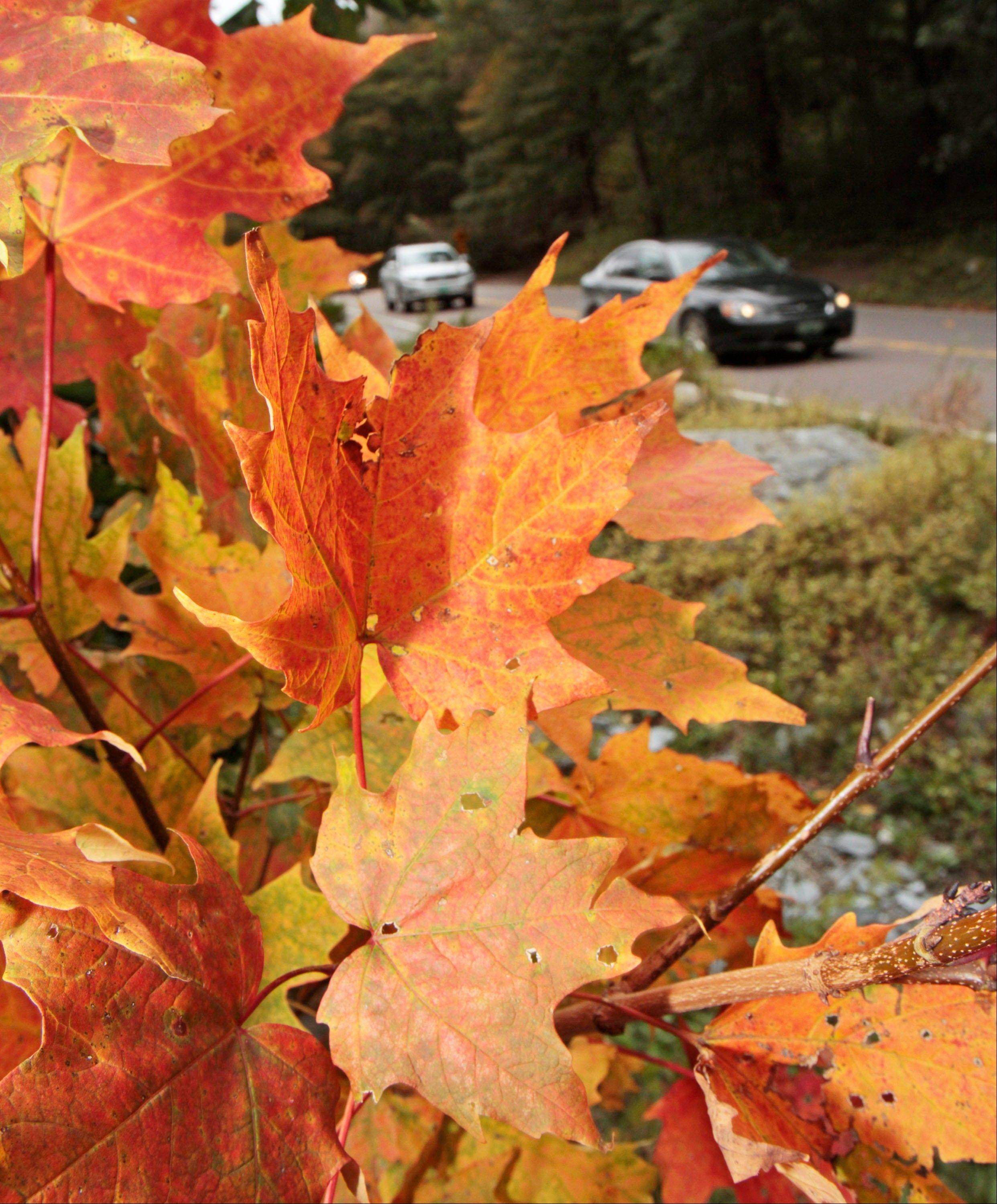 Cars drive by colorful foliage in Smugglers Notch in Stowe, Vt.