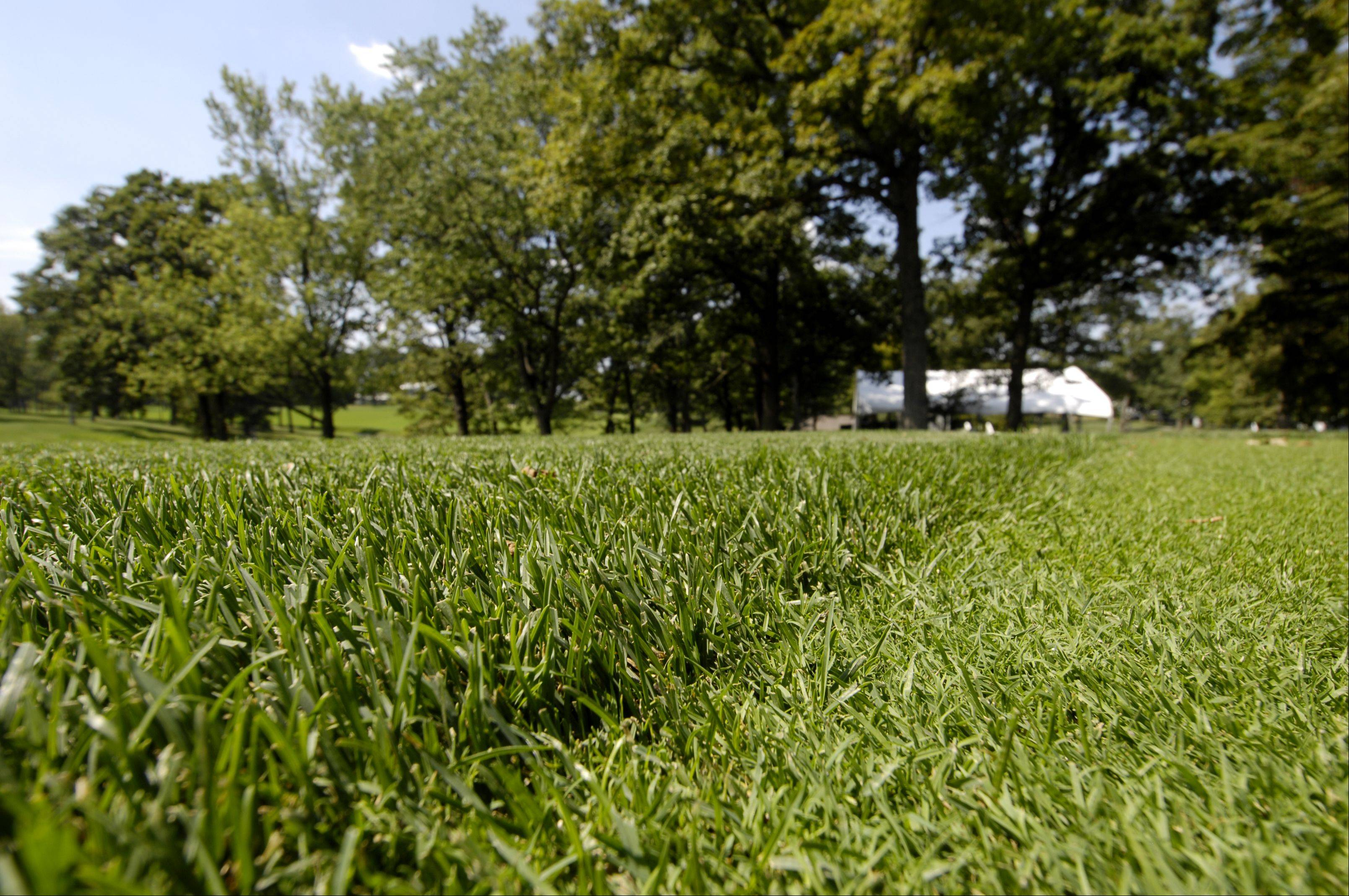 The Medinah Country Club No. 3 course will have an exceptionally short first cut of rough for this week's Ryder Cup.