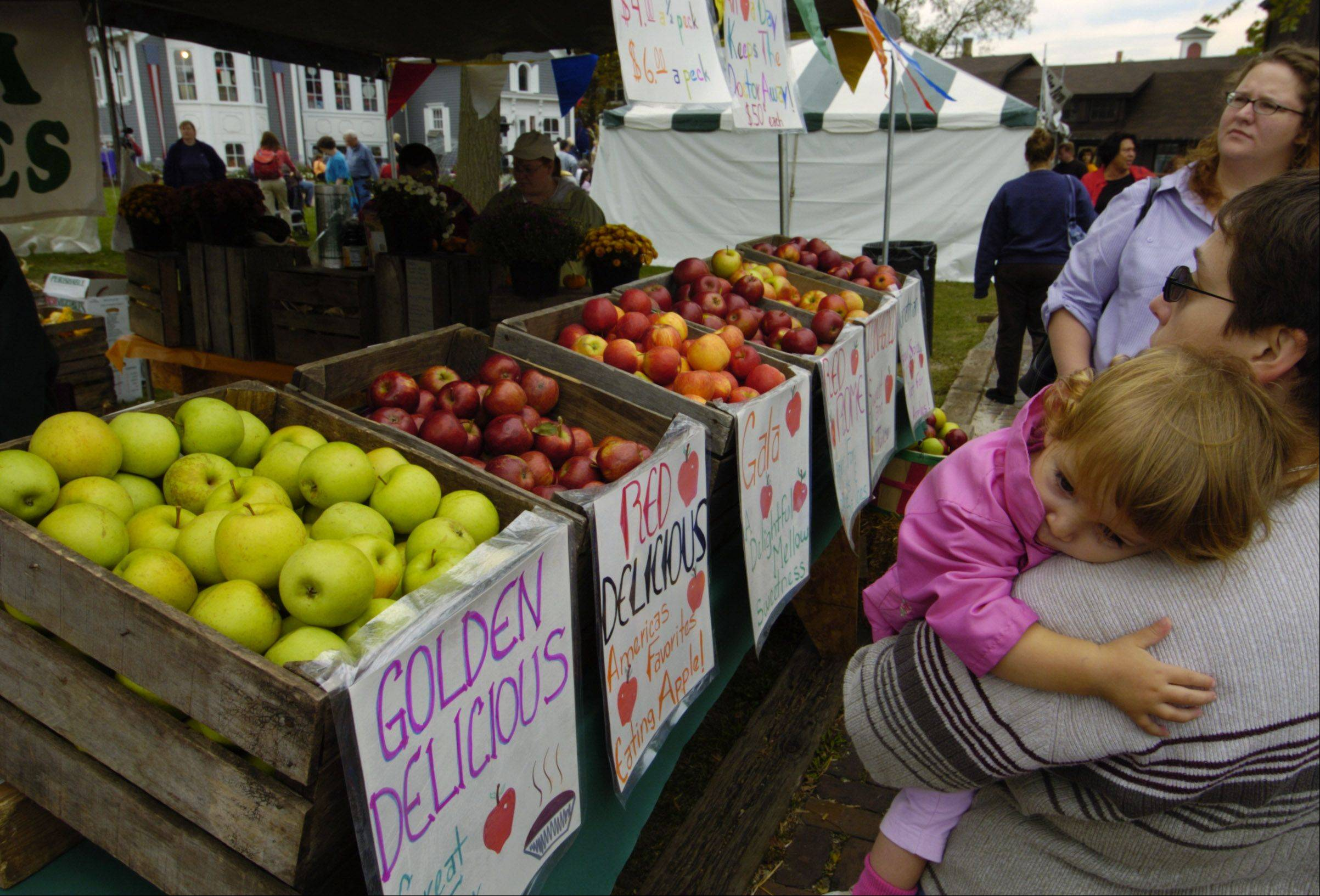 Visitors enjoy looking over a wide variety of apples at Long Grove Apple Fest.