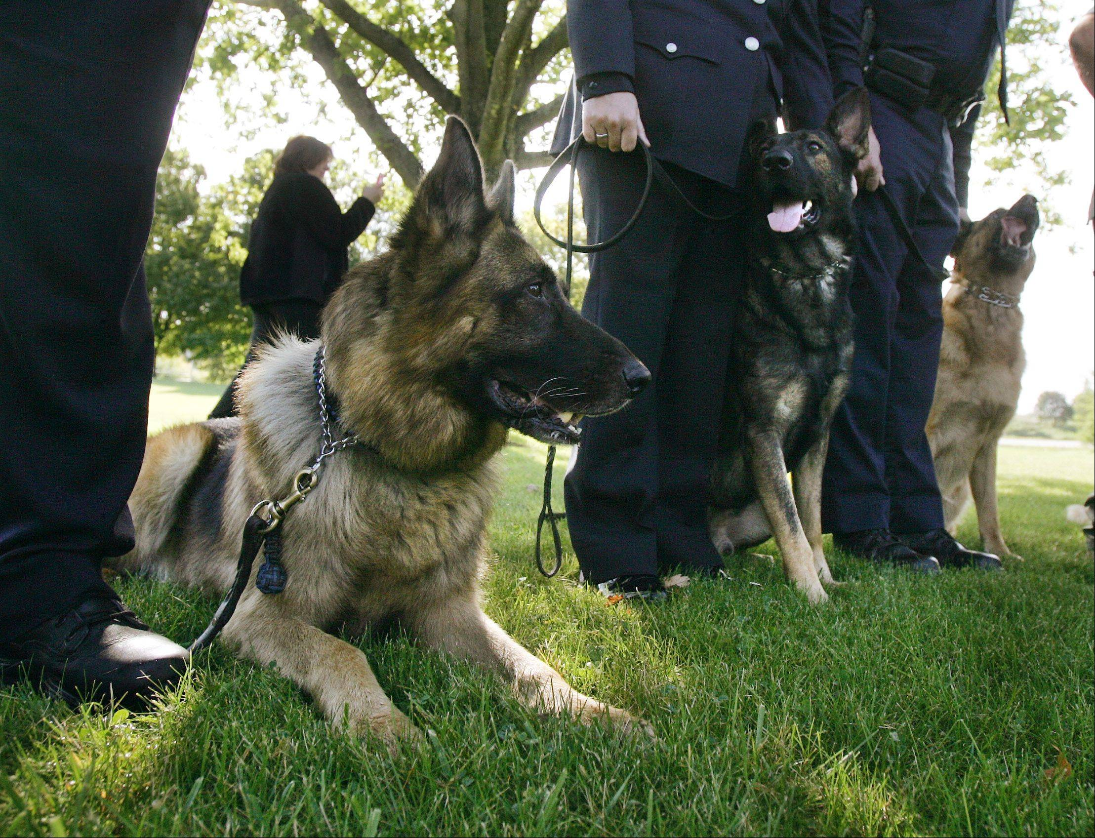 Gurnee police dog Shane and Buffalo Grove four-legged cop Saxon join other working canines during Wednesday�s unveiling ceremony for the Northern Illinois Police K-9 Memorial. It�s at Highland Memorial Park near Gurnee and open to the public.