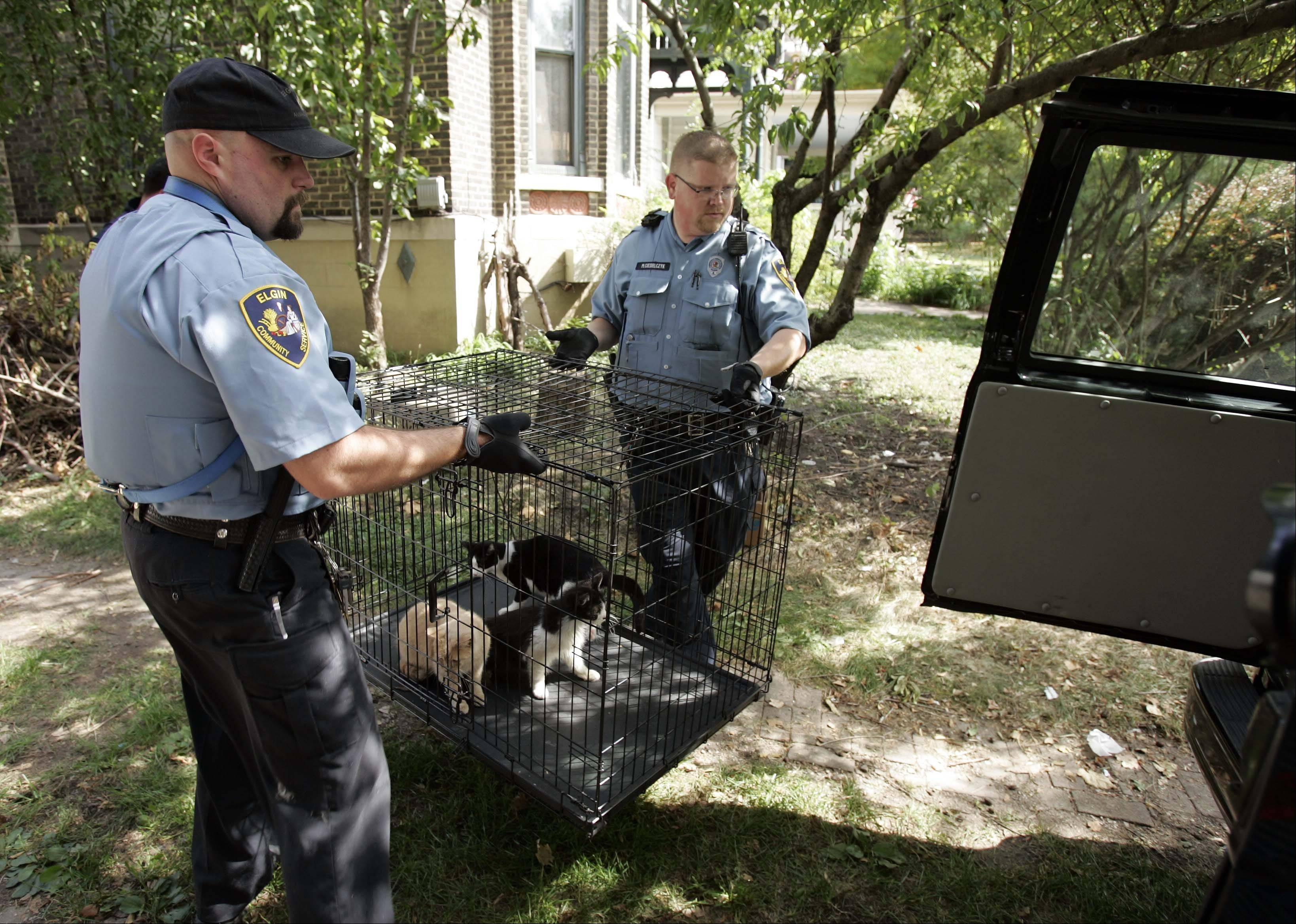 Elgin animal control officers James Rog, left, and Matt Ciesielczyk load a crate with three cats that are now being treated for various infections by a local animal hospital. Officers responded to reports of animal cruelty Wednesday and found an estimated 60 dead cats in a van in the backyard of a home on Villa Street. One dead dog was also found in the van.