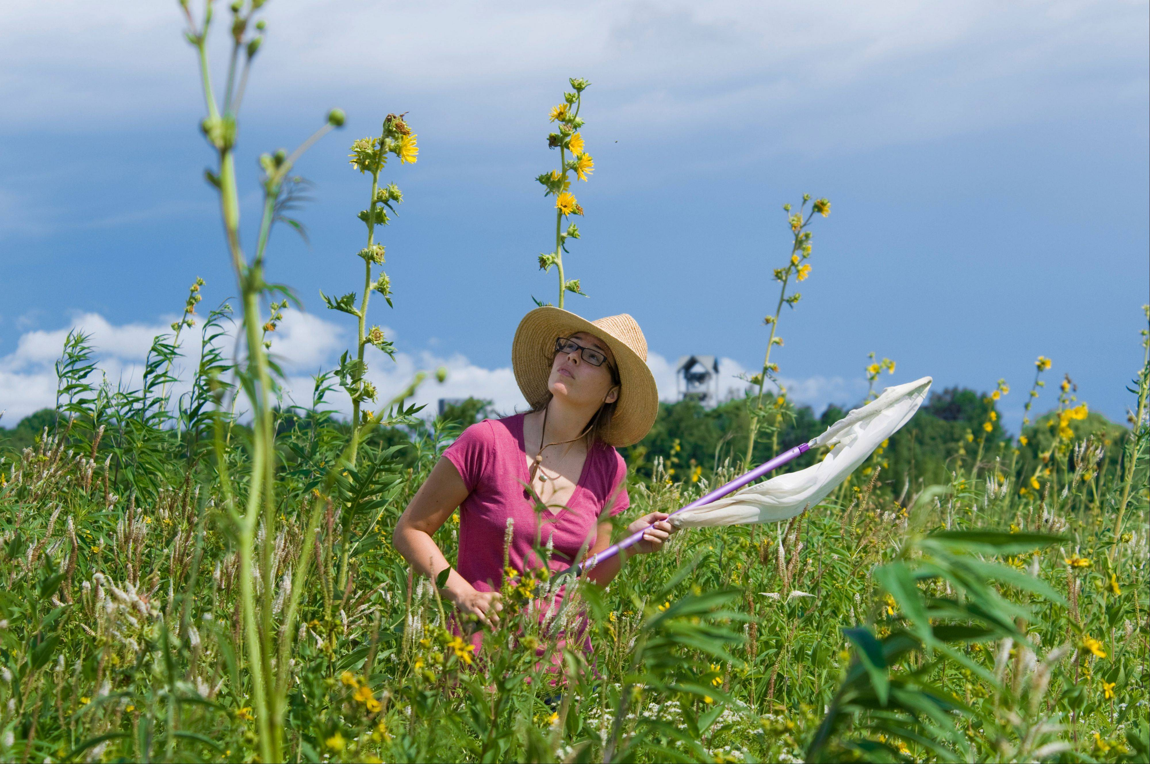 "Plant biology and conservation Ph.D. student Rebecca Tonietto will present ""Native Bees: Habitat Needs and How You Can Help"" at 7:15 p.m. Tuesday, Oct. 2, at the Fremont Public Library."