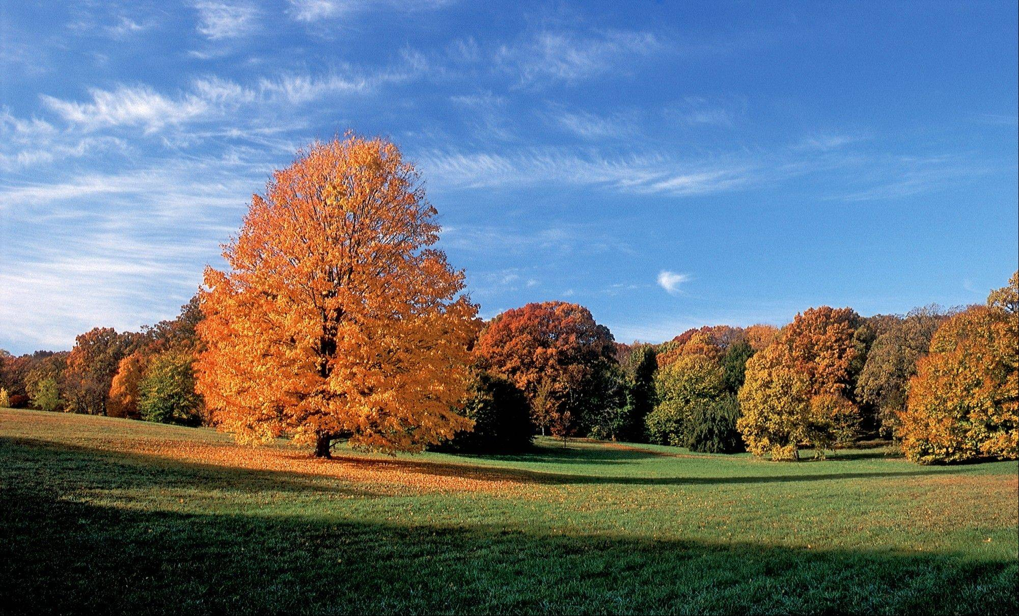 The Morton Arboretum's Fall Color Festival opens Sunday, Sept. 30, and runs through October featuring more than 4,000 types of trees, shrubs and plants.
