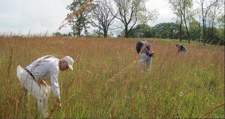 Citizens for Conservation volunteers gather seeds.