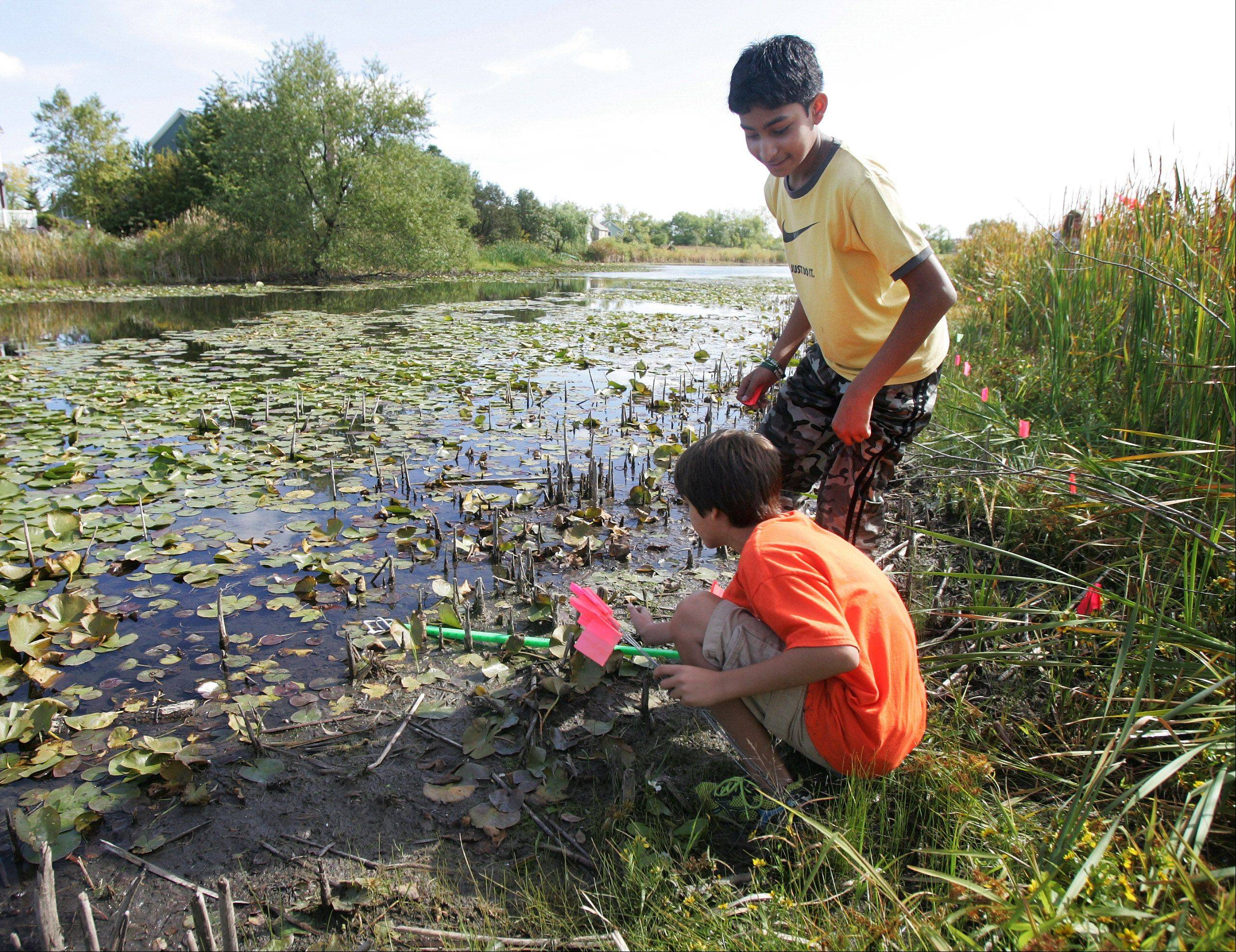 Gilbert R. Boucher II/gboucher@dailyherald.comSeventh grade students Brett Lay, below, and Rayyan Talha place markers for the water line of a pond as the class from Prairie Crossing Charter School survey a sanctuary pond Wednesday in Grayslake. The project was part of Geography Week at the school.