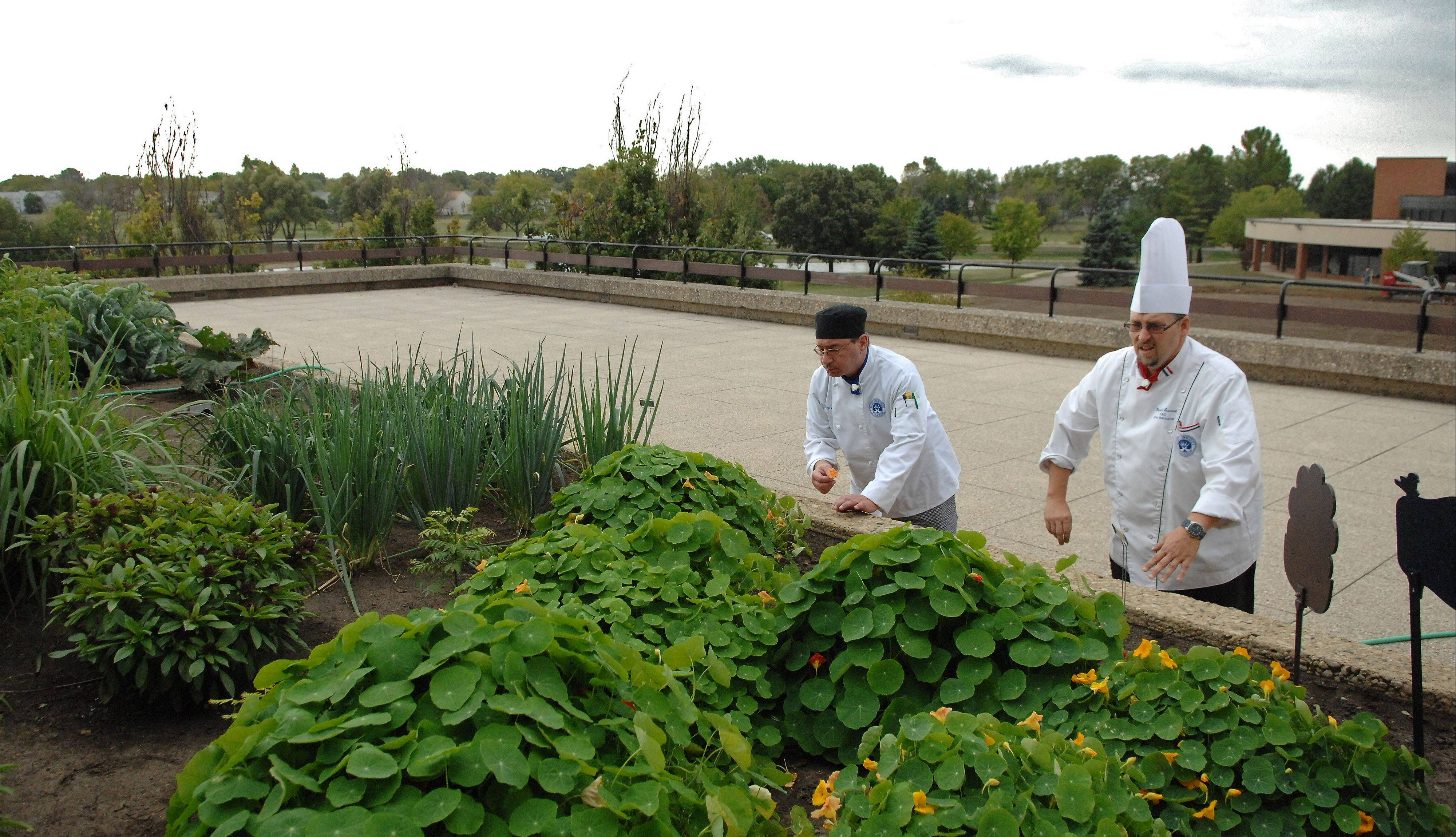 Culinary student Greg Slarich of Elgin, left, and instructor chef Patrick Stewart pick vegetables and herbs from Elgin Community College's rooftop garden on a recent afternoon.