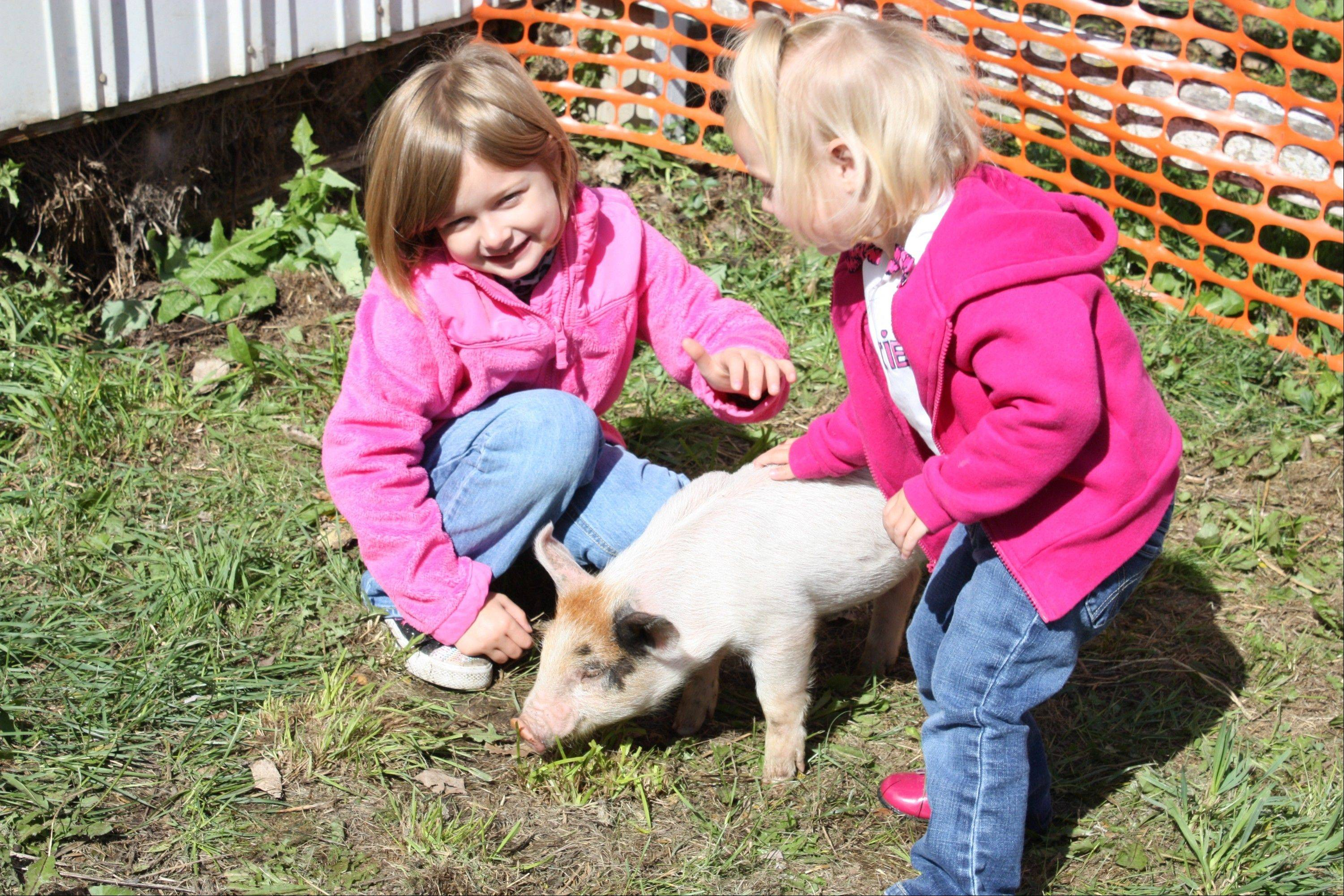 A petting zoon will be part of the family friendly activities at the Palatine Park District's annual Fall Festival.