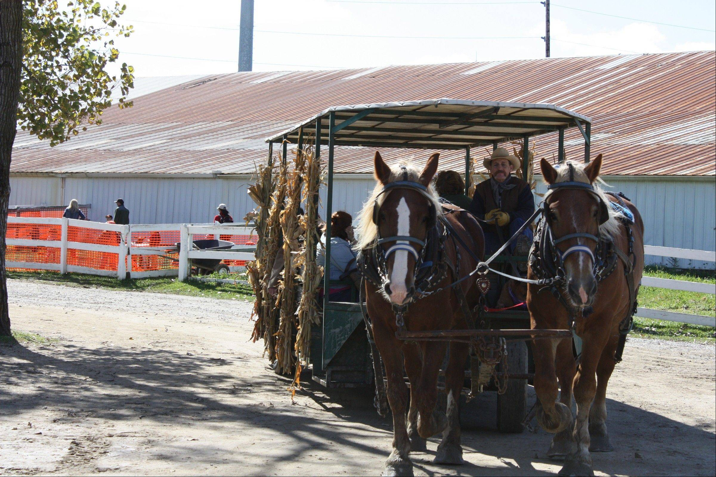 Come take a horse-drawn wagon ride Oct. 6, at the 15th annual Fall Festival, hosted by the Palatine Park District.